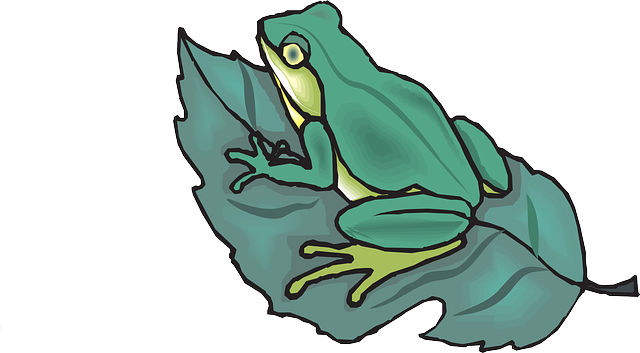Leaf On Top Of Amphibious Frog Clipart, Frog Drawing, Drawing Sheets, Cartoon 27633