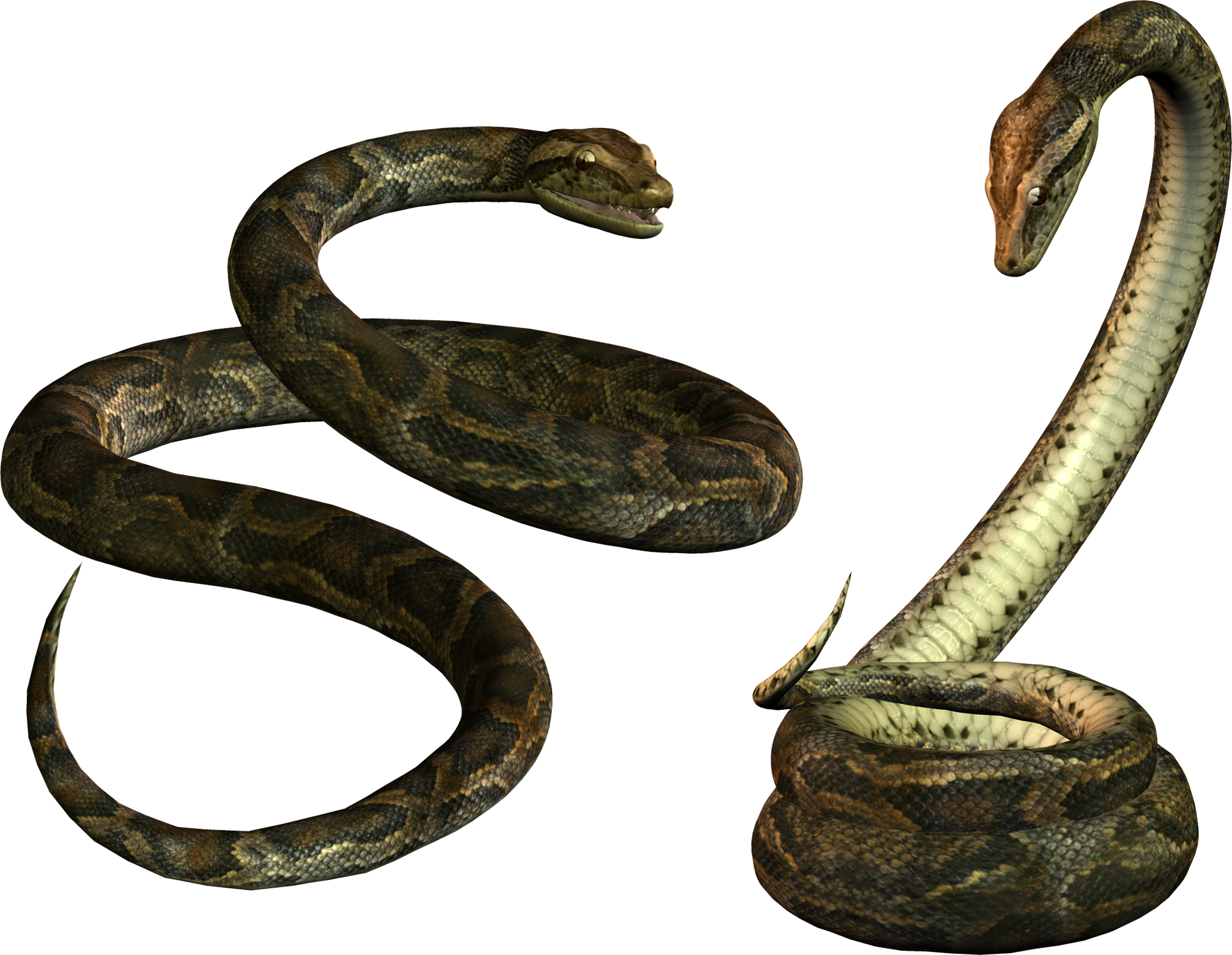 Two Side By Side Anaconda Transparent Image 27465