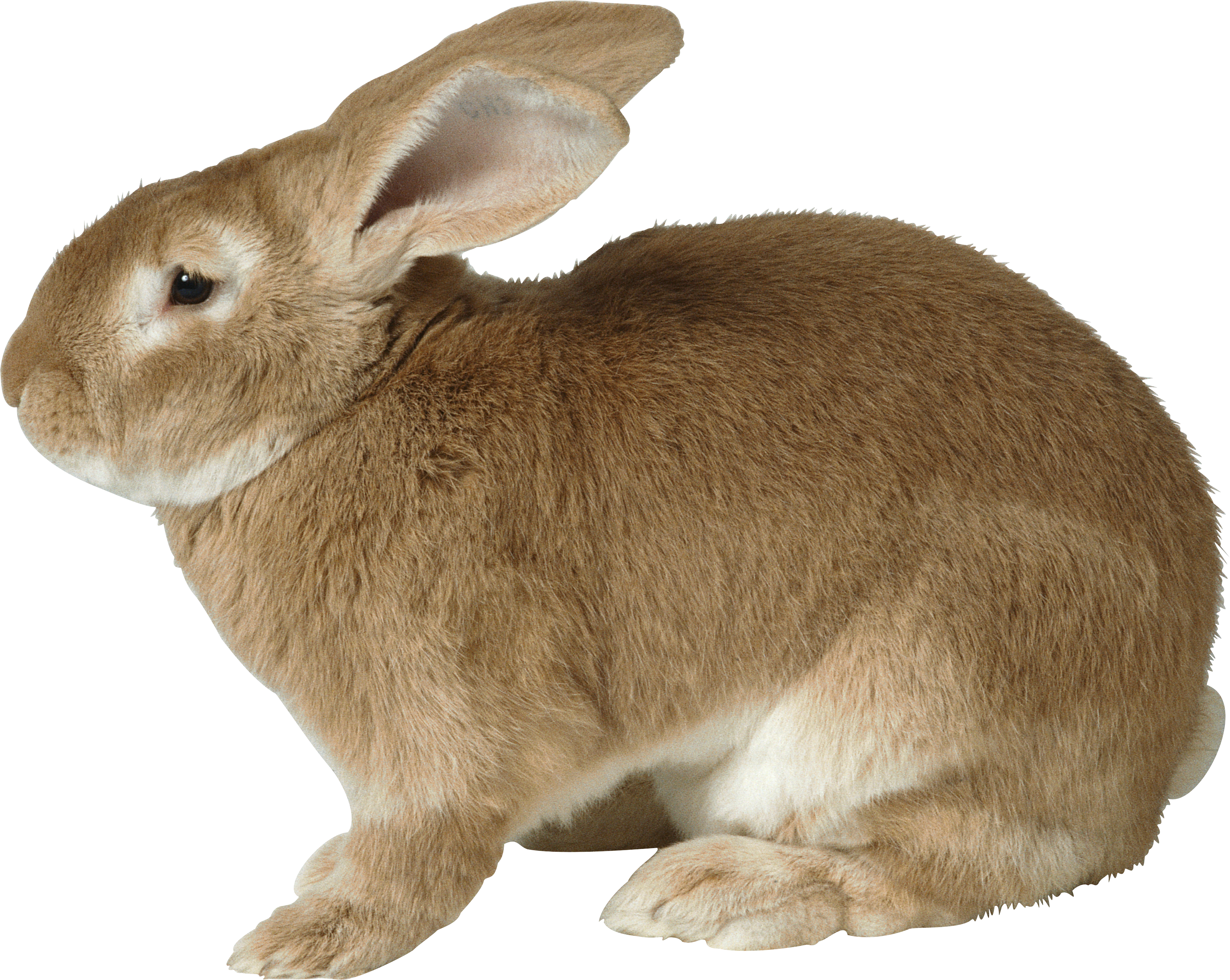 Brown Side View Rabbit Animal Png