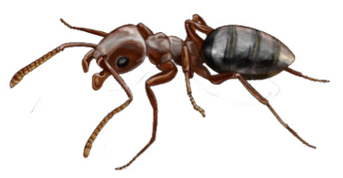 Ant Clipart Photo 27404