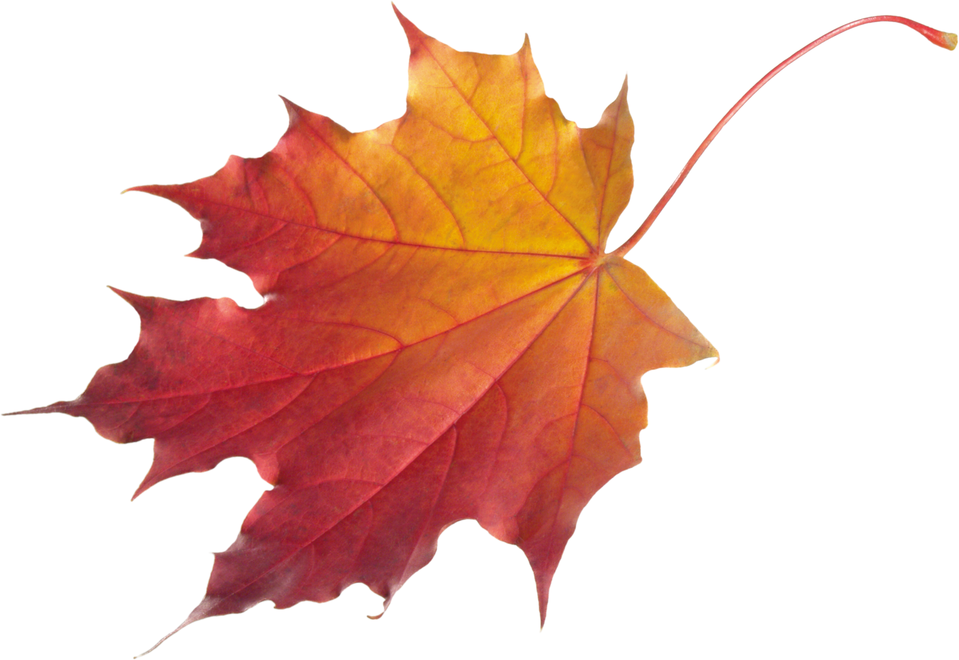 Autumn Leaves PNG Picture 23473