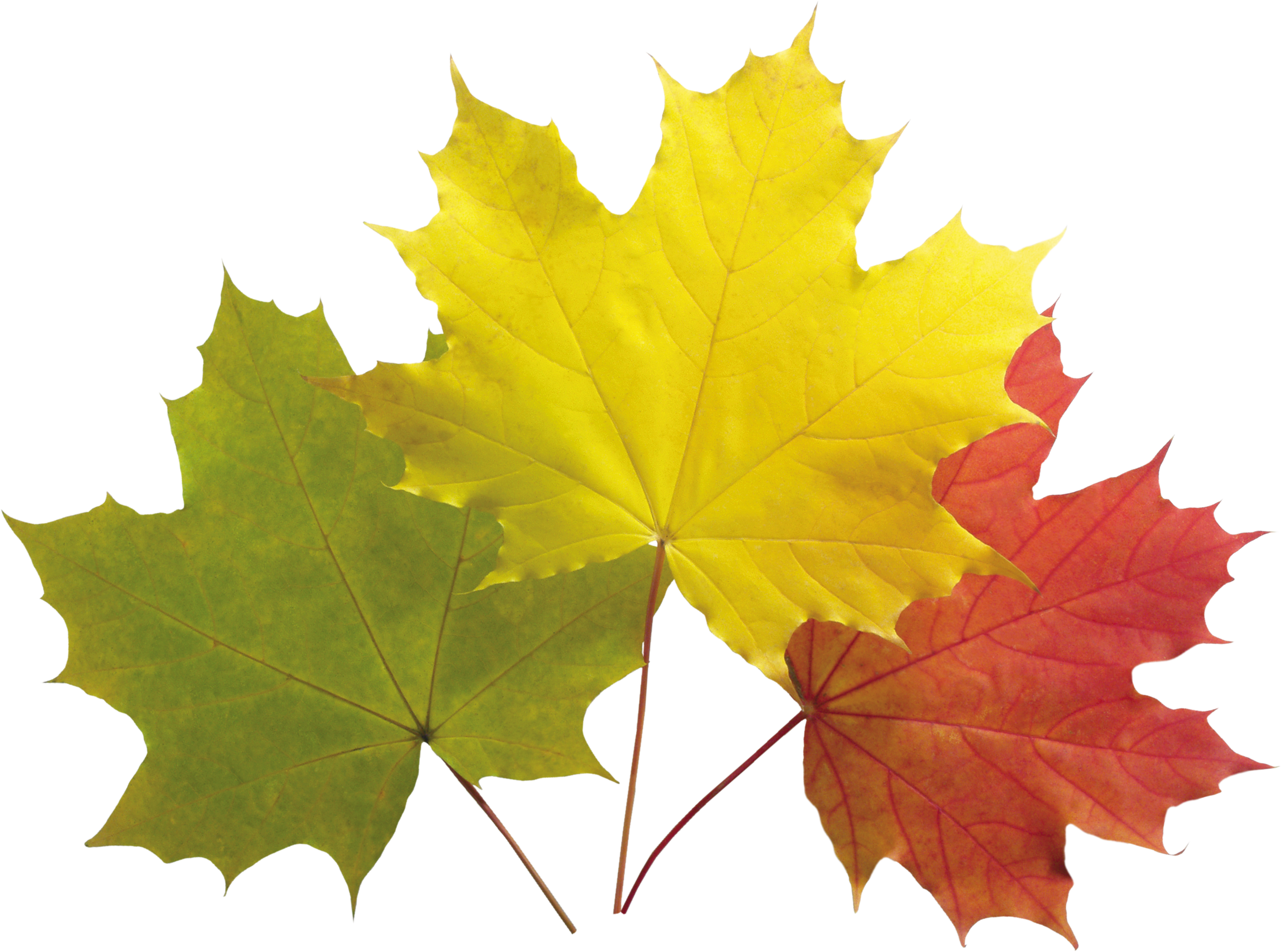 Autumn Leaves Colorful Png