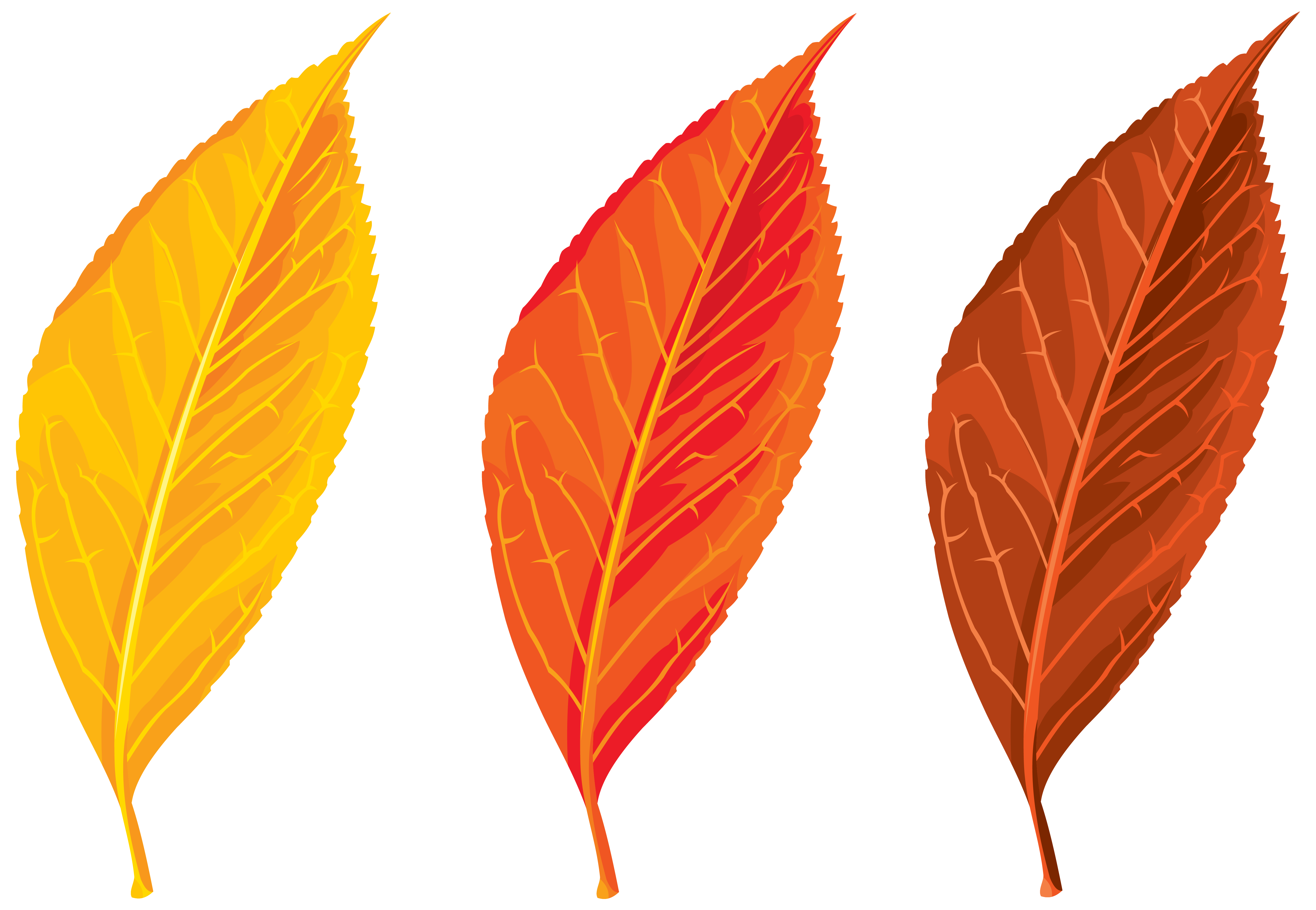Autumn, Spring, Winter, Seasons, Leaf, Clip Art