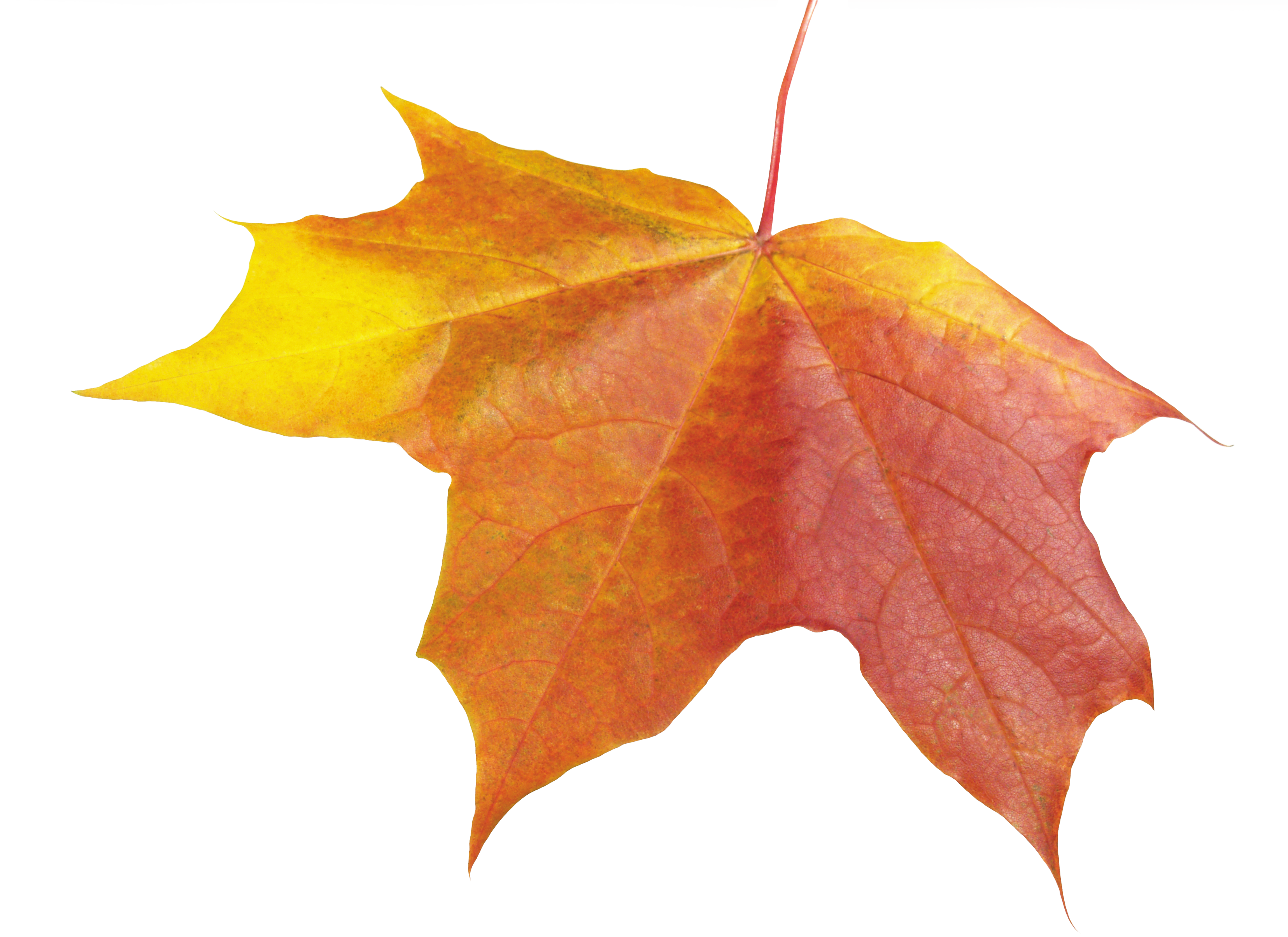 Leaf, Autumn, Spring, Winter, Seasons, Leaf, Png