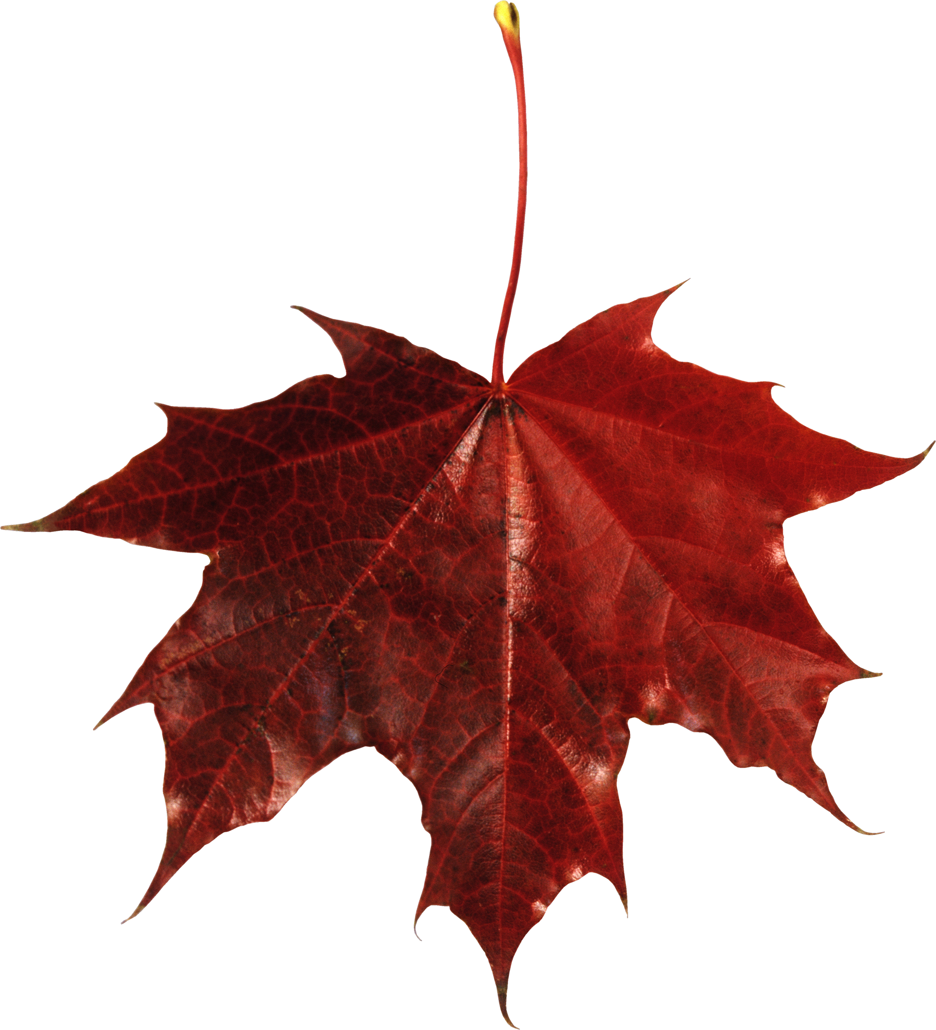 Red Leaves, Autumn, Spring, Winter, Seasons, Leaf, Png 5883