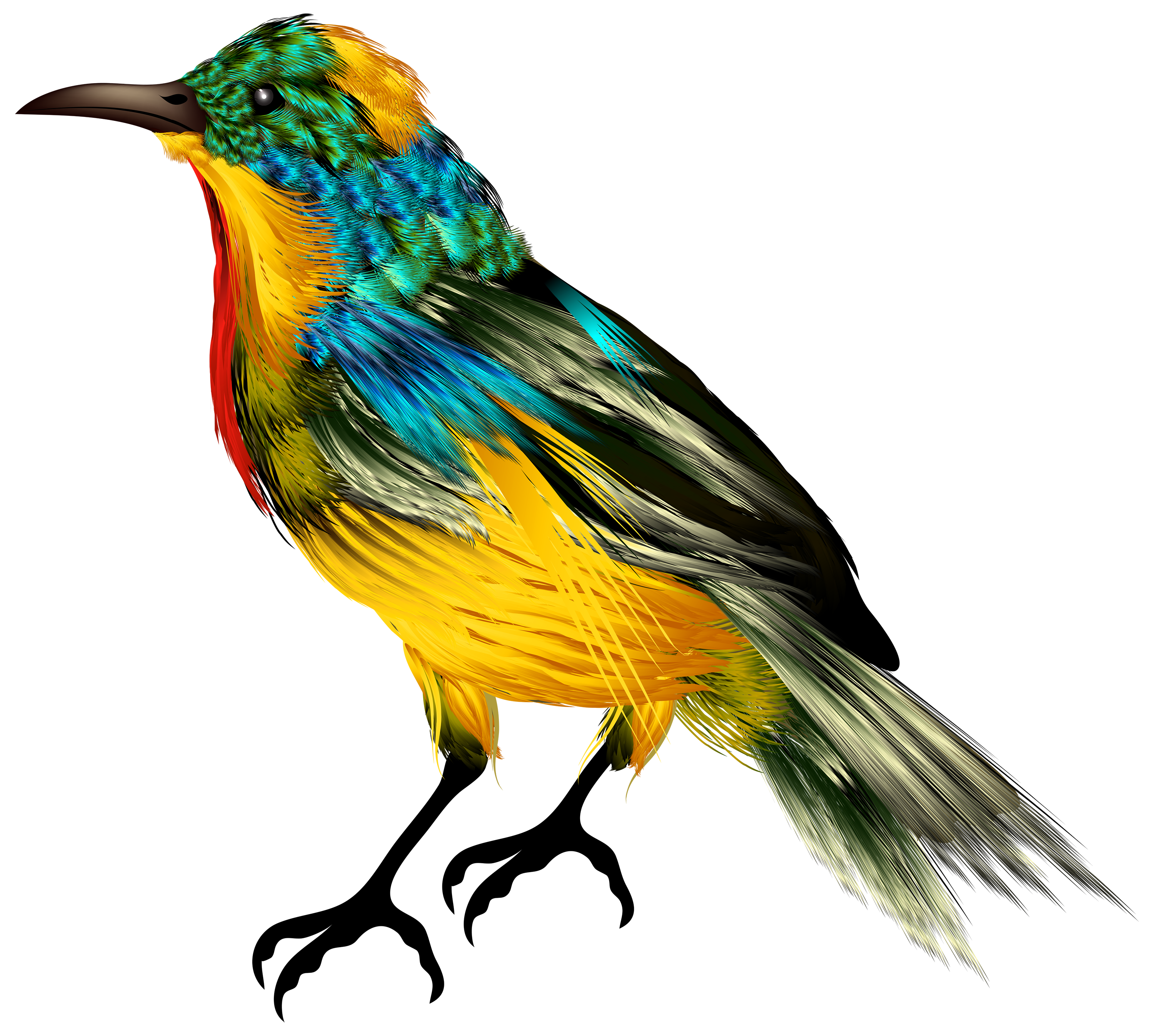Colorful Bird Photo Free Transparent, Species, Beak, Wing