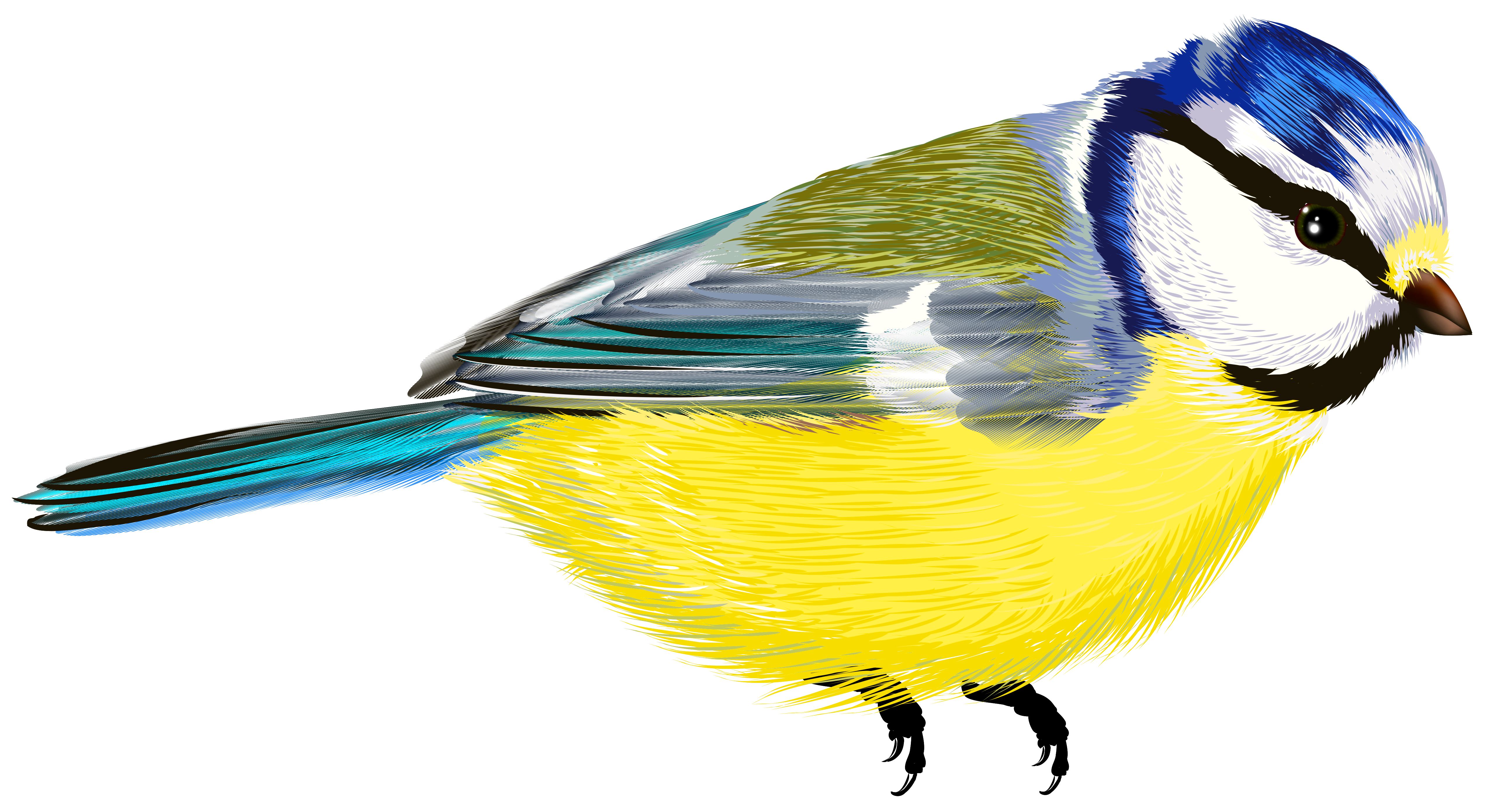 Fat Colored Bird Illustration HD Clipart, Sparrow, Migration, Stroll