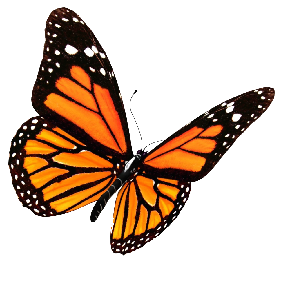 Orange Flying Butterfly Picture, Black Pattern, Flowers 28240
