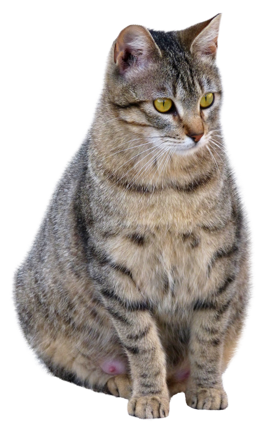 Cat PNG Icon 19113