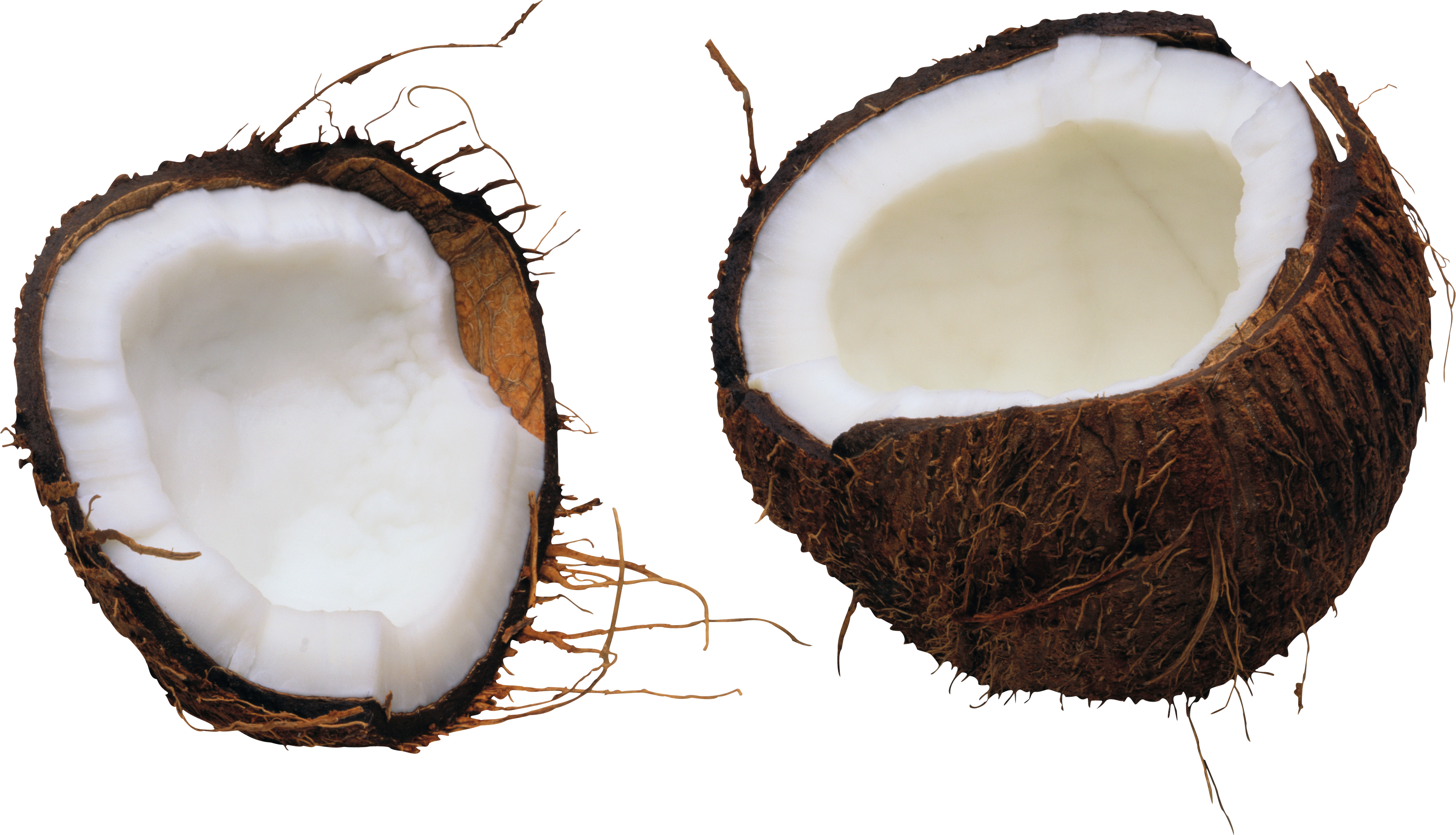 Coconut Transparent Image PNG Images