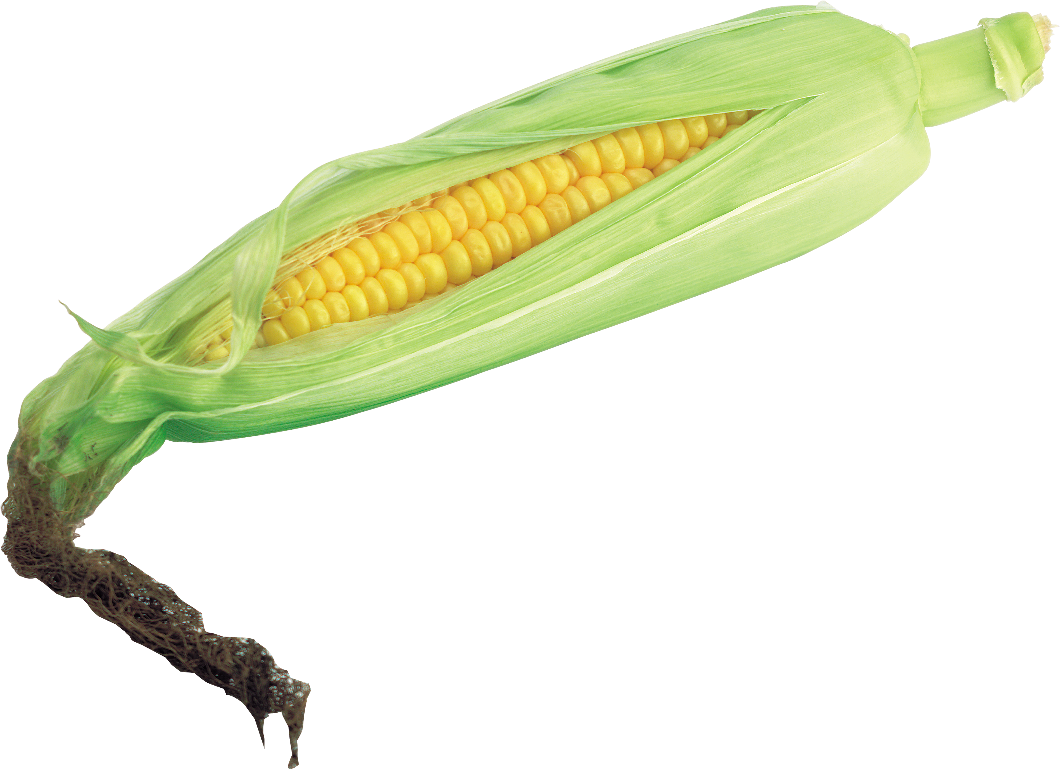 Corn HD Photo Png PNG Images