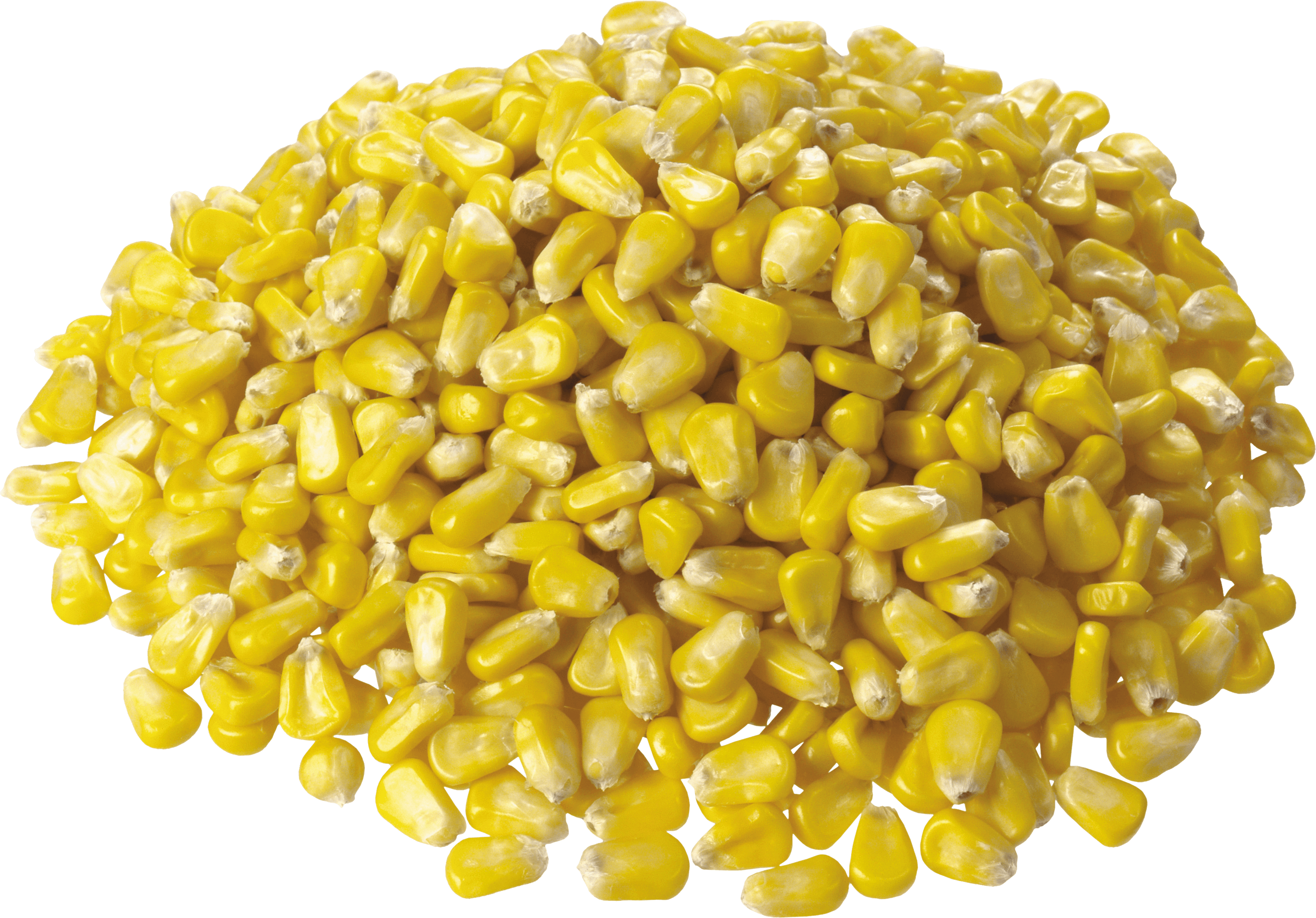 Corn Picture PNG Images
