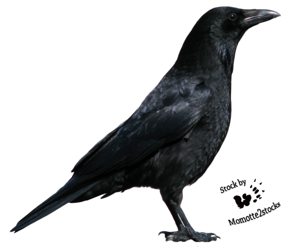Crow Clipart HD 20557