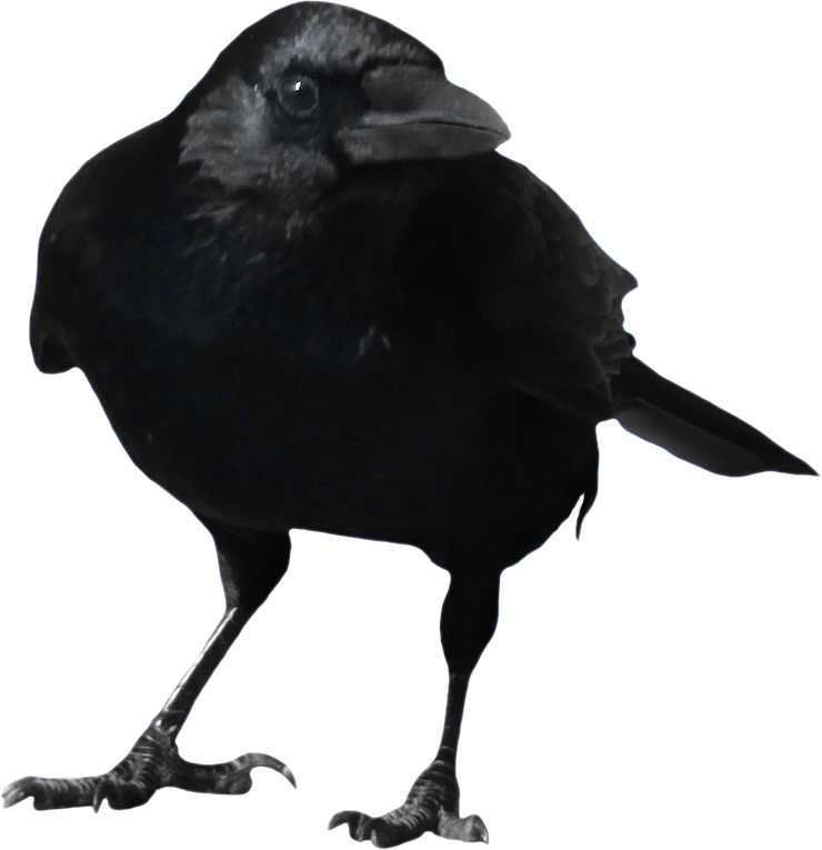 Crow PNG Picture 20579