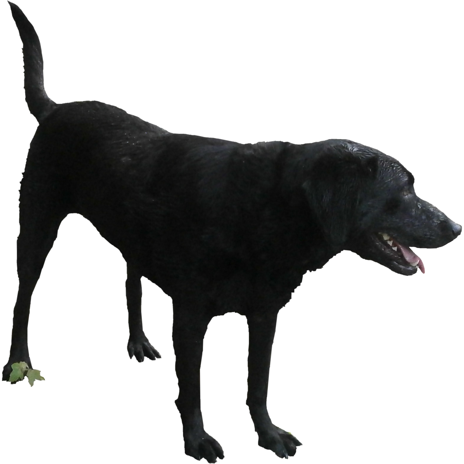 Black Dog HD Image 9113