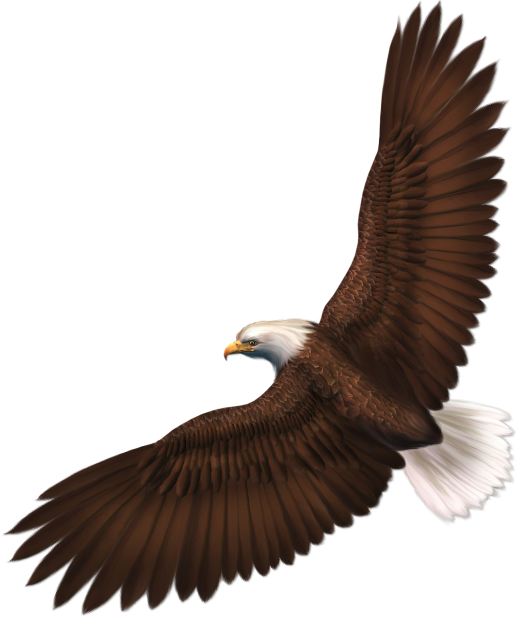 Eagle Transparent Image 19054