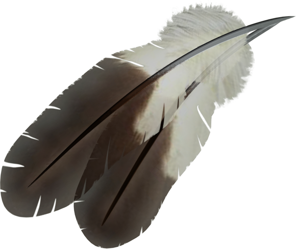 Bird, Feather, Flying, Winged, White, Dark Images 2919