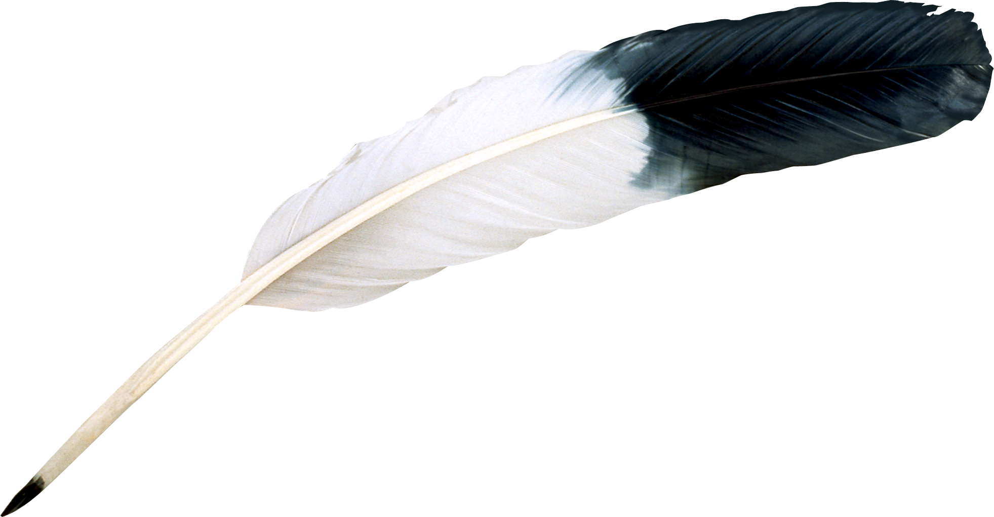 Black, White, Bird Feather, Animal, Feather Png 2924