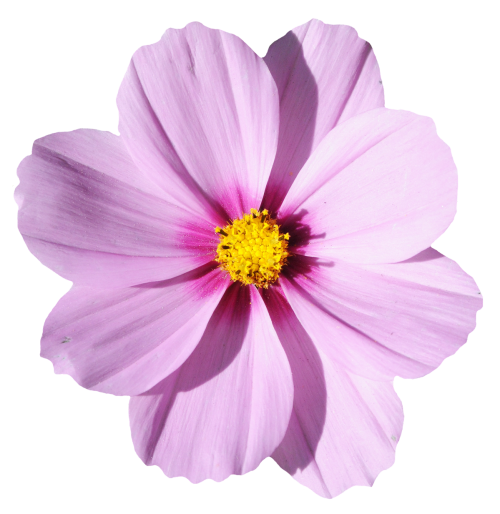 Blossom Flower Png Transparent Picture 6473
