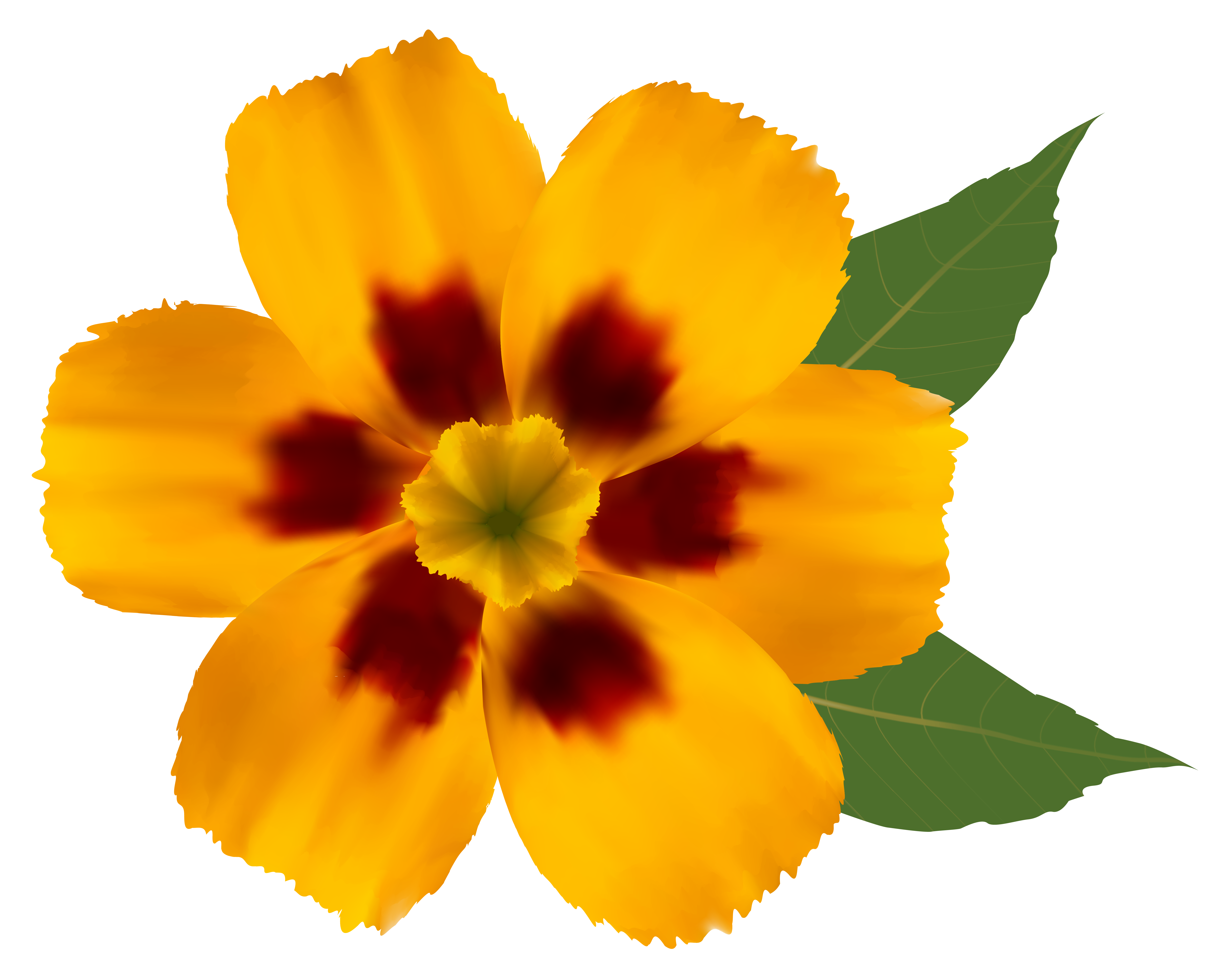 Flower Png Image Daisy