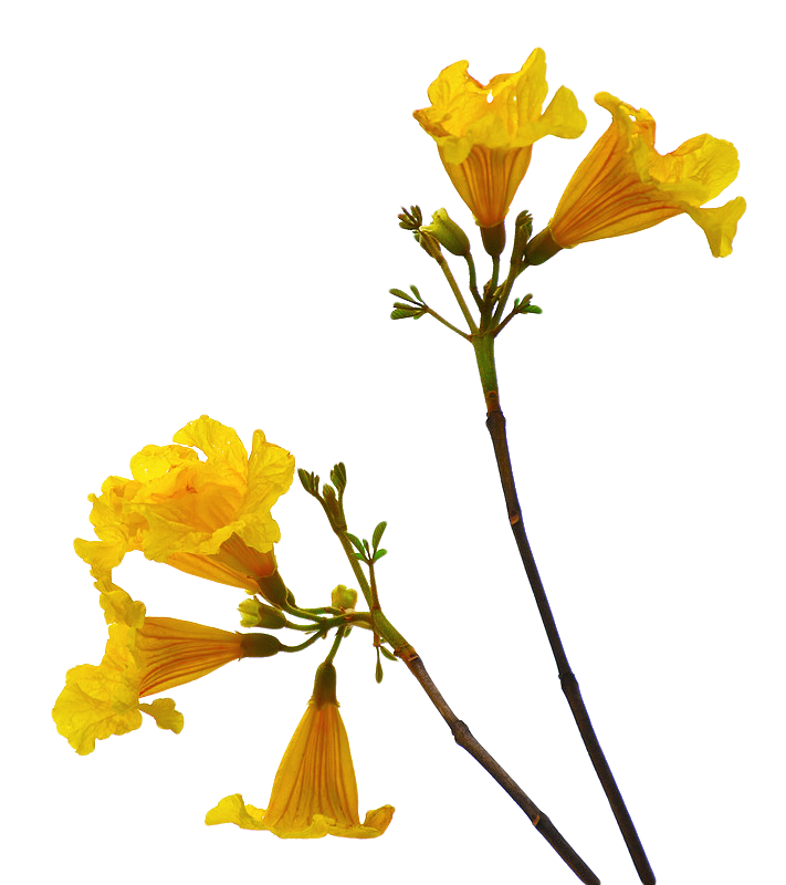 Flower Png Picture 6493