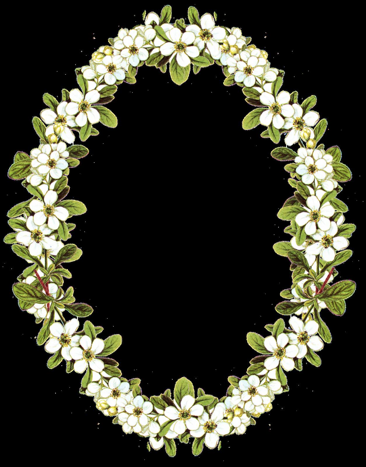 Flower Frame Images - 5637 - TransparentPNG