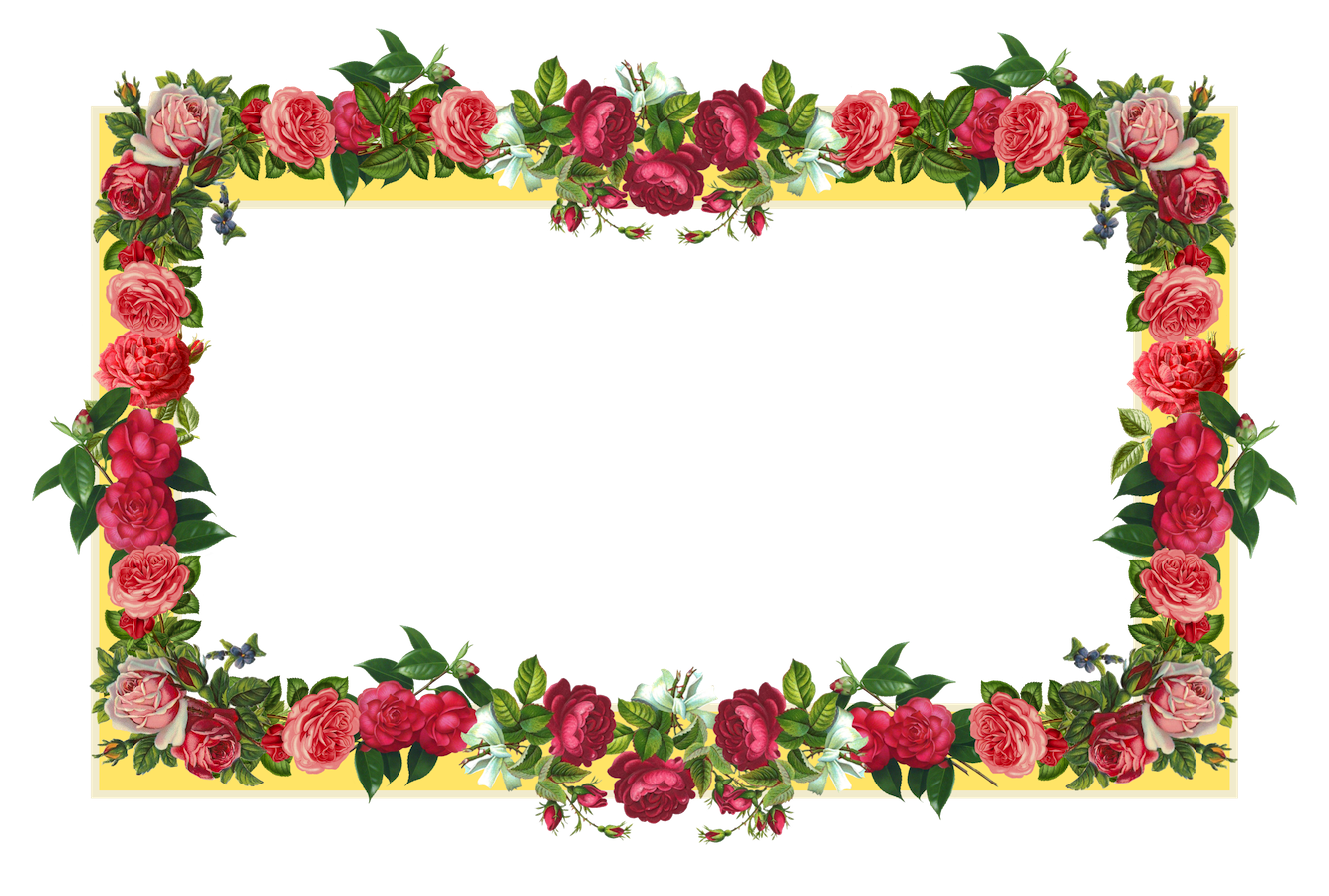 Rose Flower Borders Png Clipart 5618