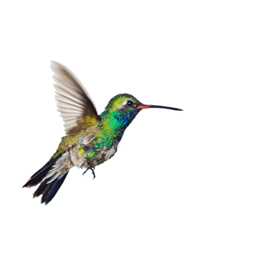 PNG Hummingbird Tattoos File Clipart 7989