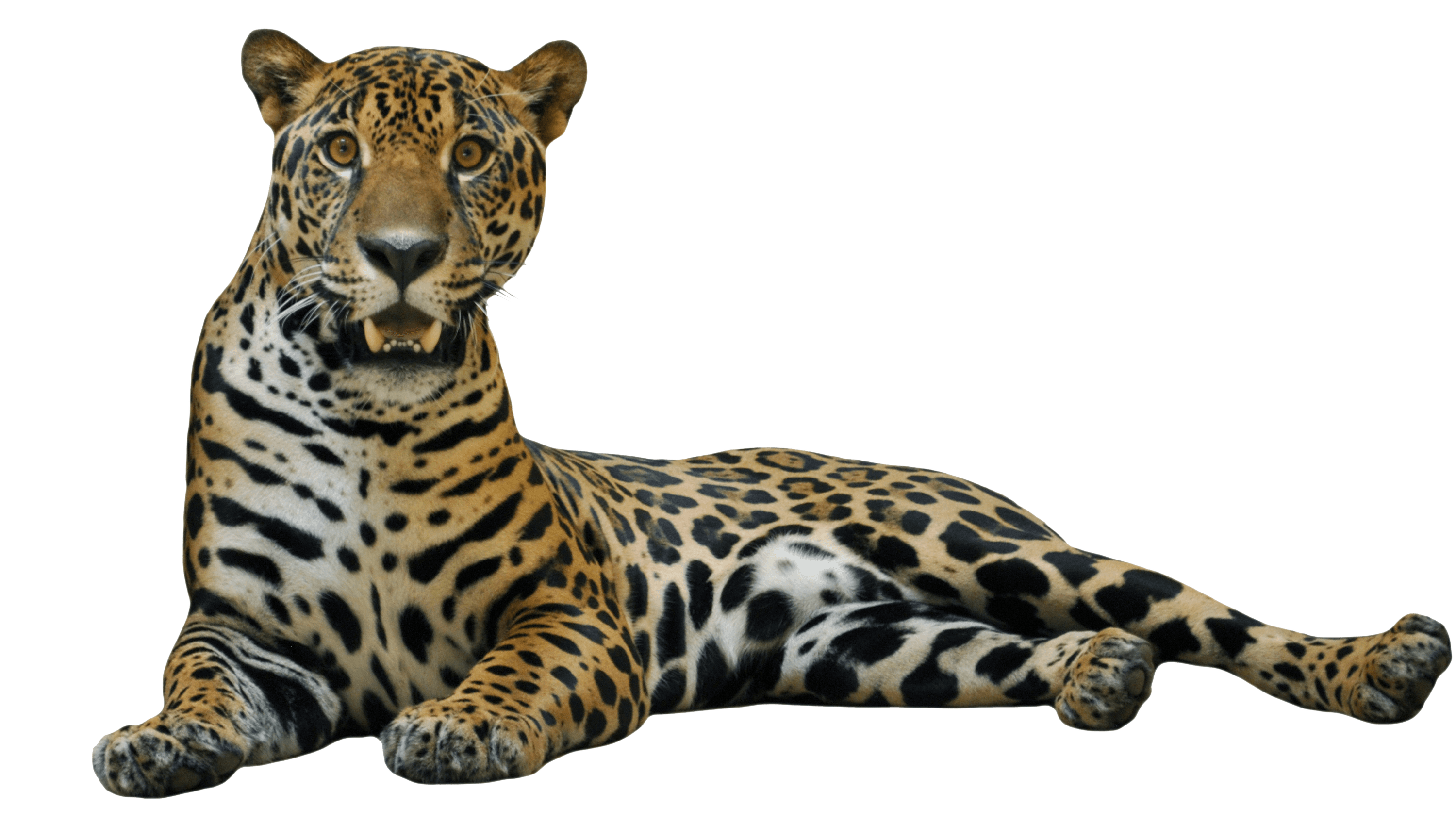 Jaguar Free Download