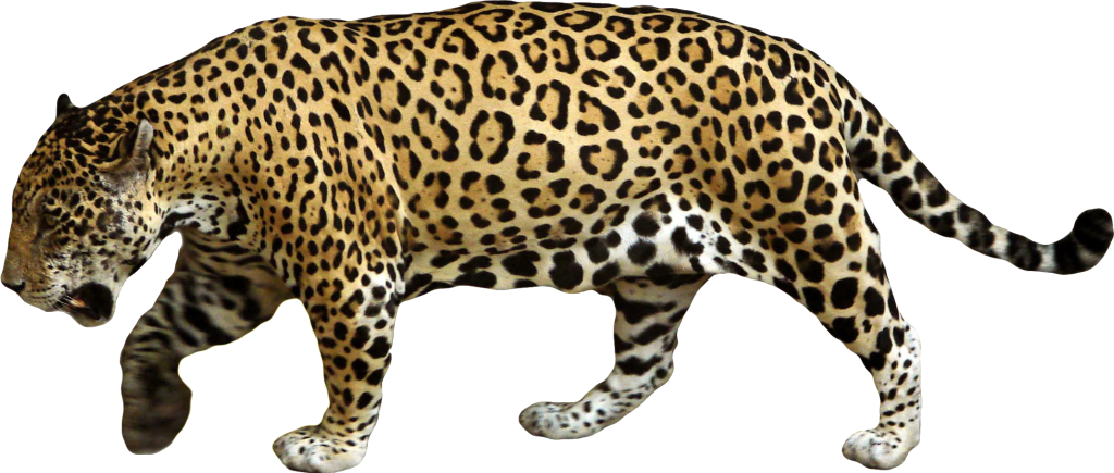 Jaguar High Quality PNG 24895