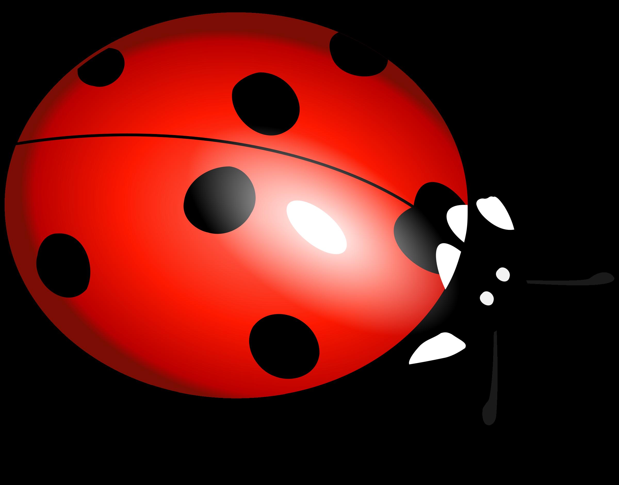 ladybug clipart file 14374 transparentpng rh transparentpng com ladybug clipart images ladybug clipart black and white