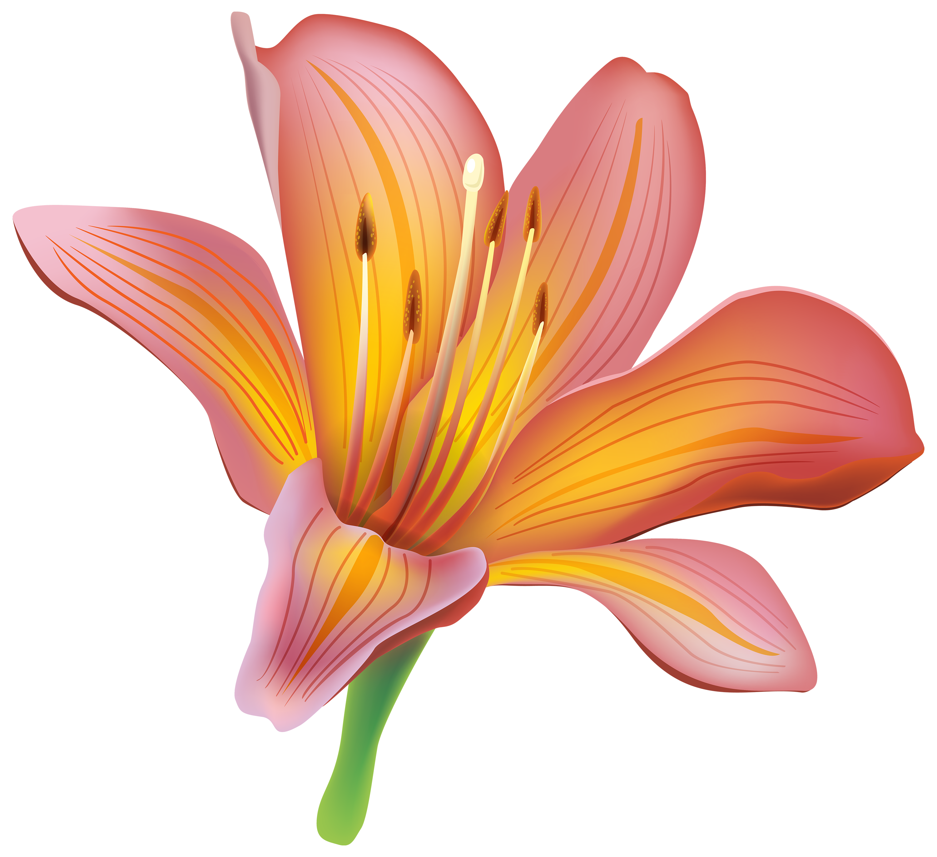Vintage Lily Free Download Transparent