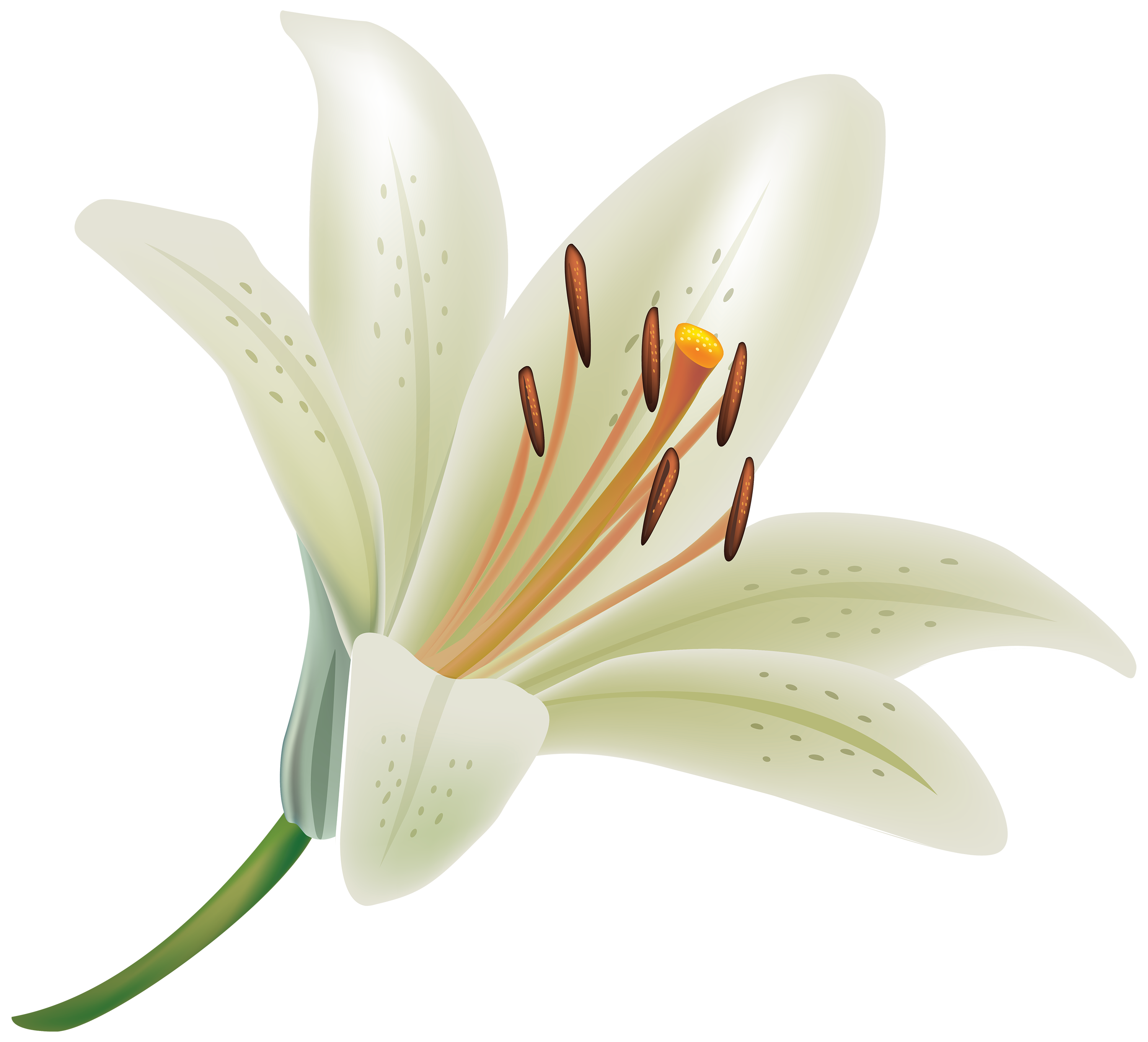 Lilies flower free cut out 18547 transparentpng lilies flower free cut out izmirmasajfo