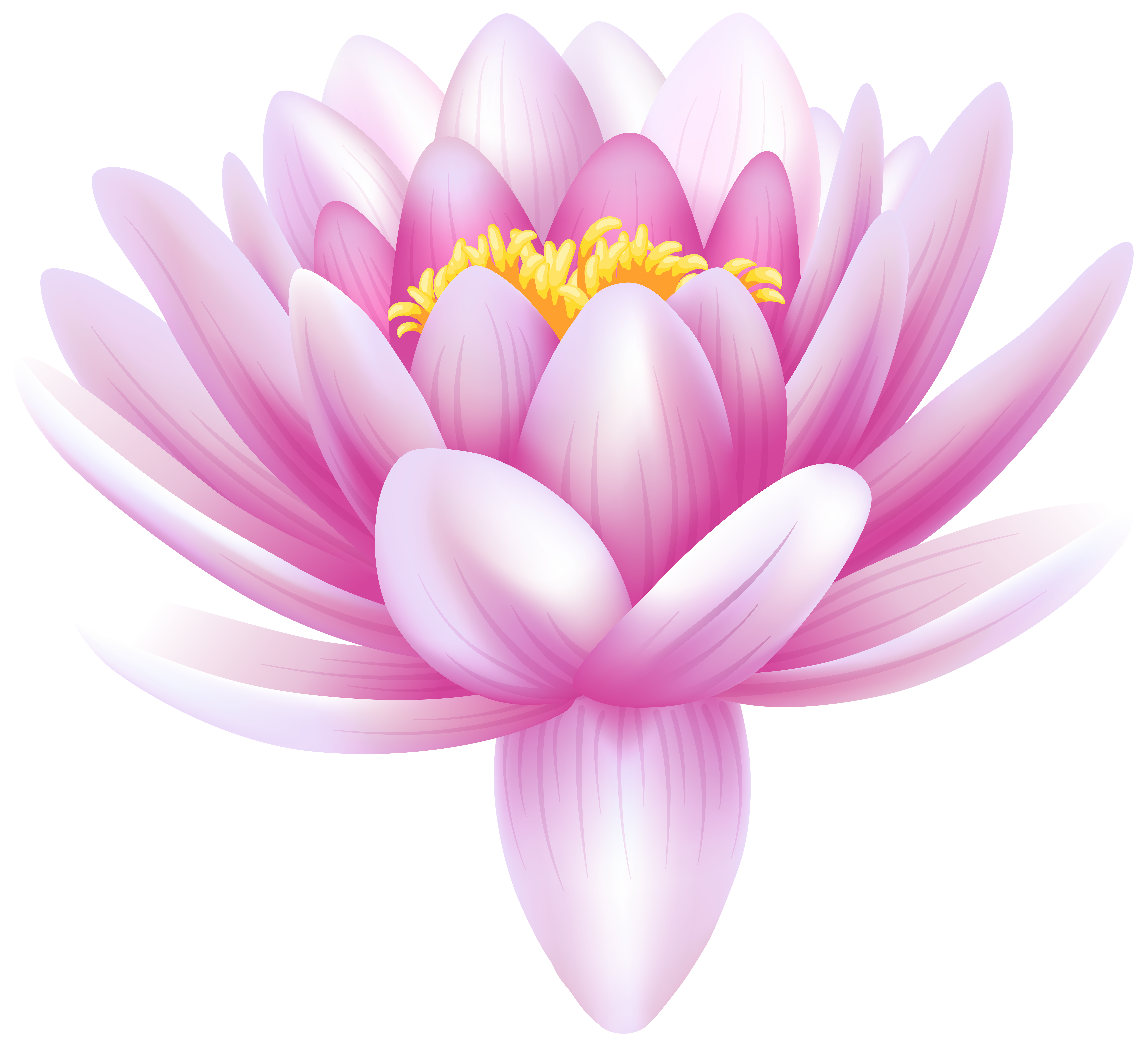 Download Lily Free Png Transparent Image And Clipart