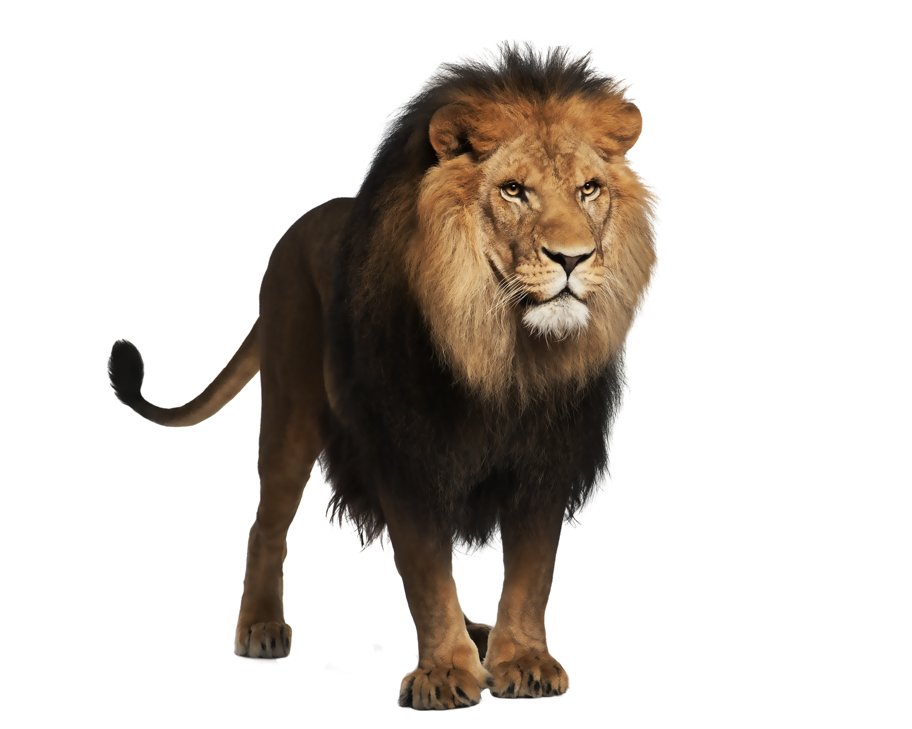 Lion Amazing Image Download