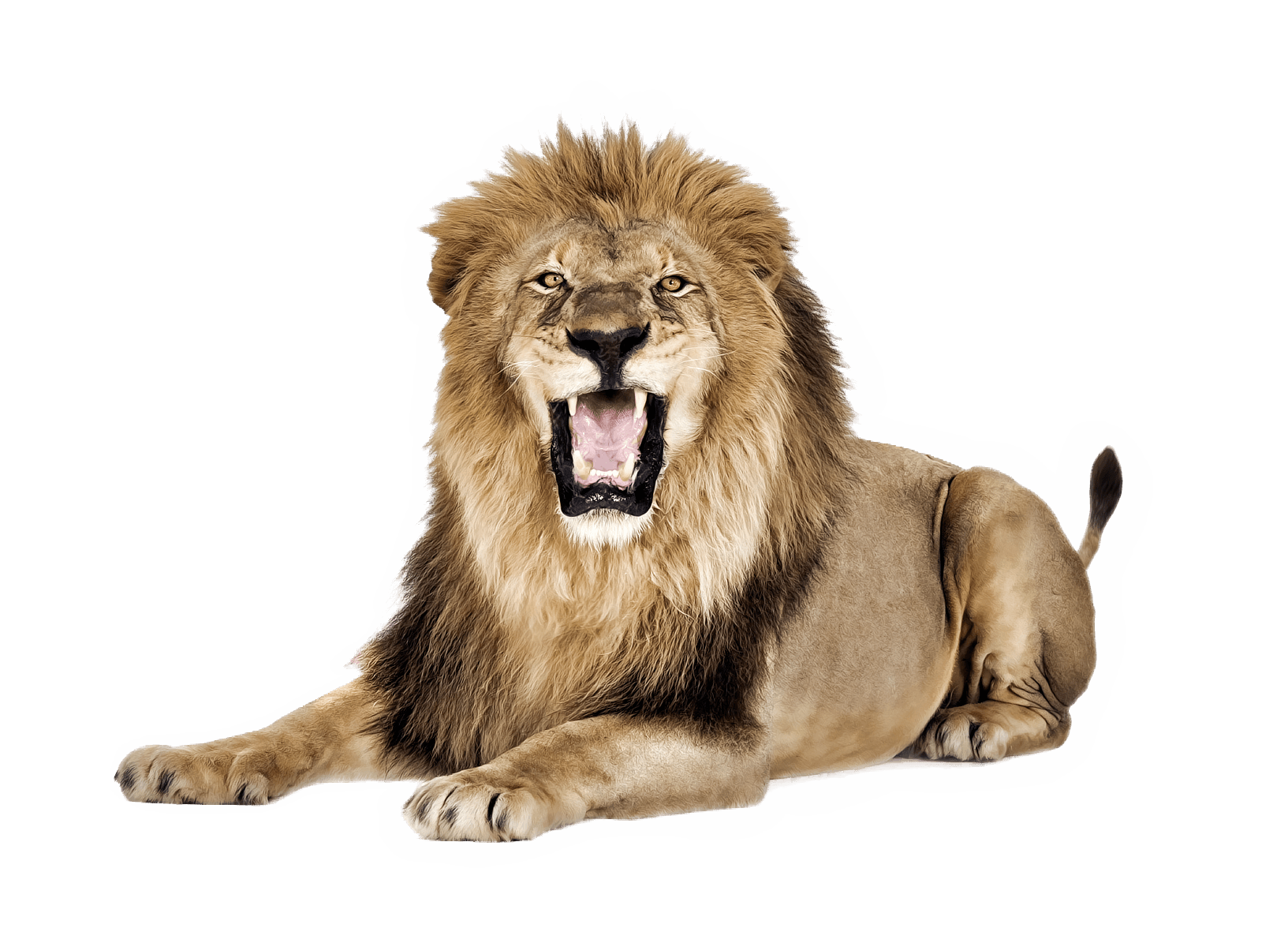 Download Lion PNG 18986