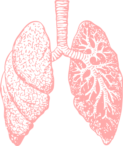 Light Lungs Png Transparent Image  3495