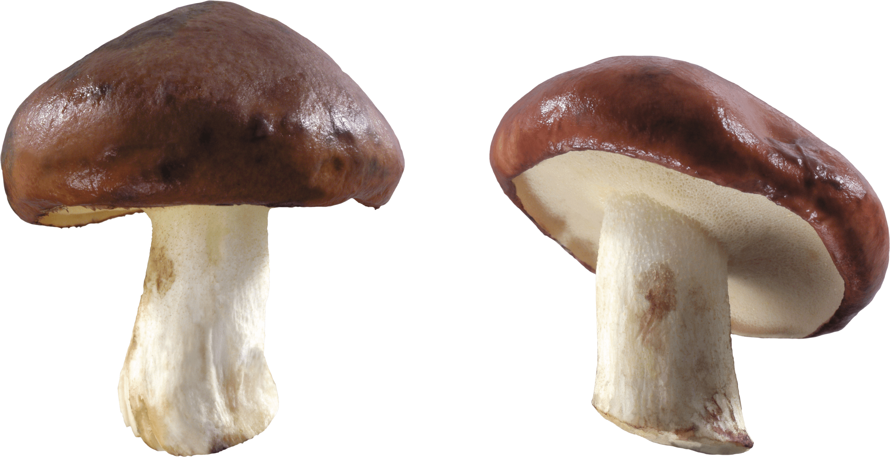 Mushroom Free Download Transparent