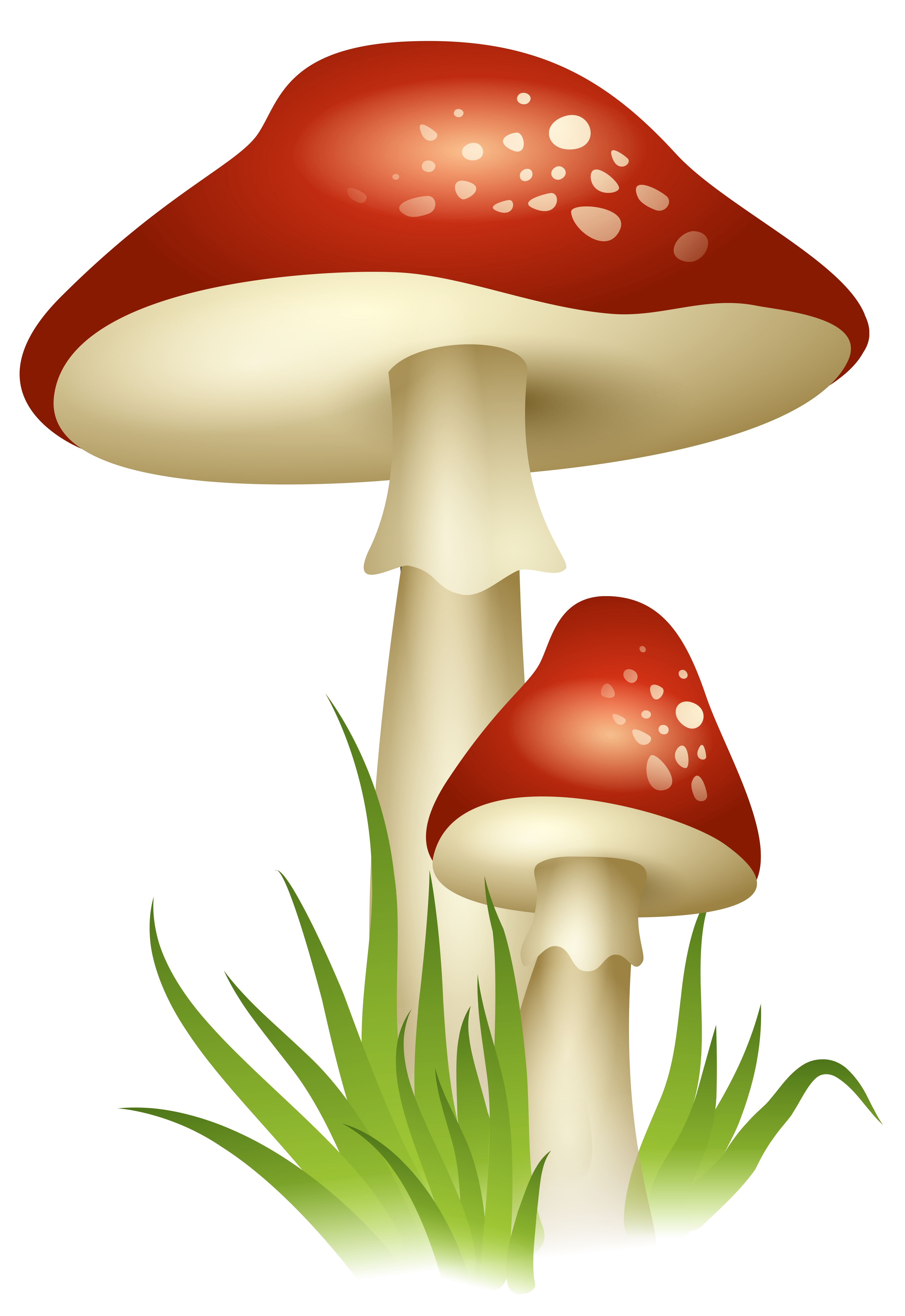Mushroom HD Photo Png PNG Images