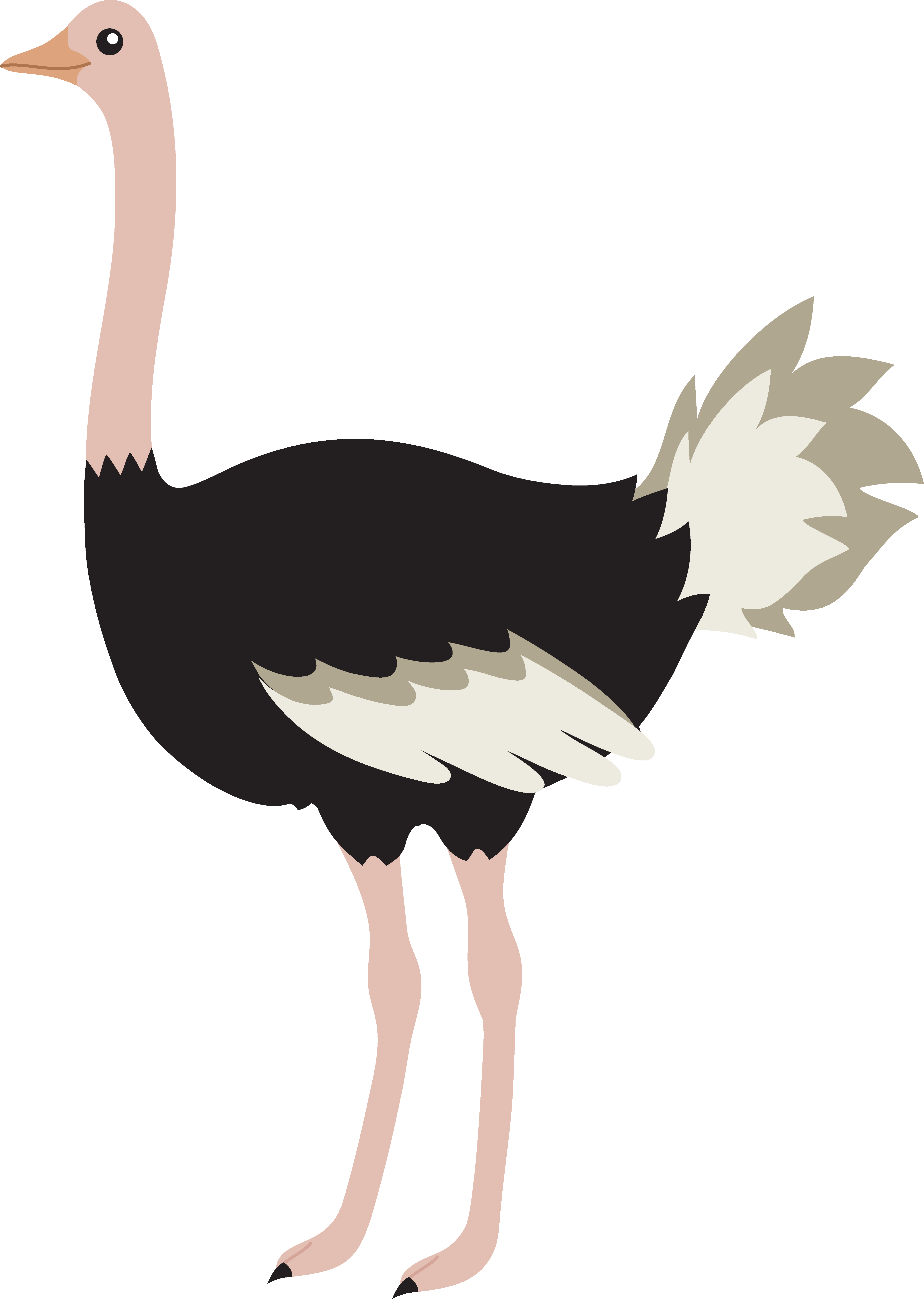 Cartoon Ostrich Png Clipart