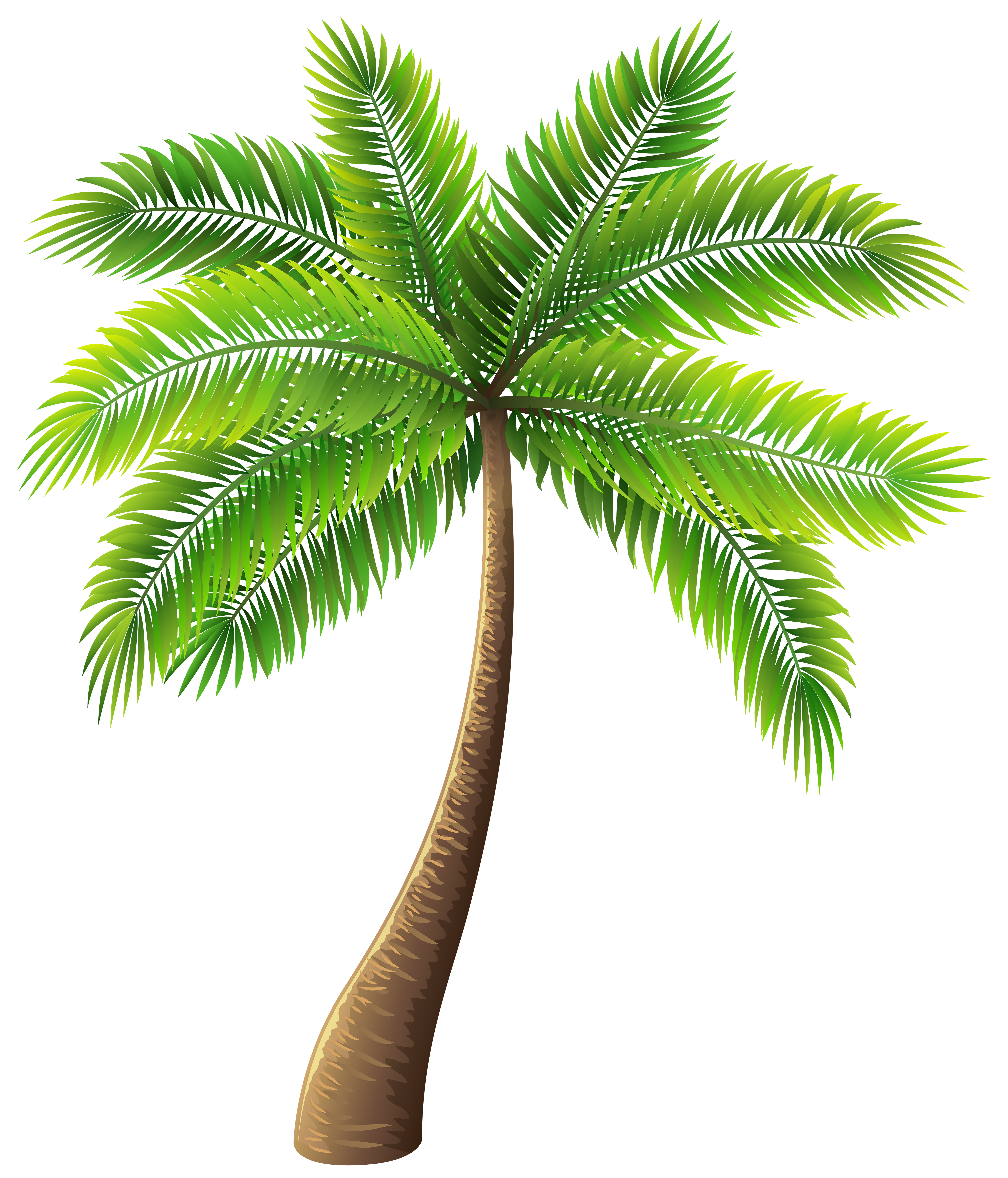 Palm Tree Free Transparent Png