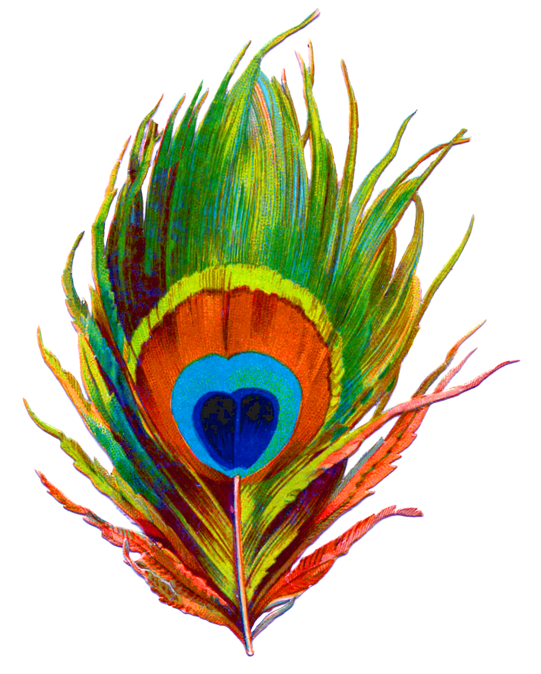 Peacock Feather Png Designs 3109