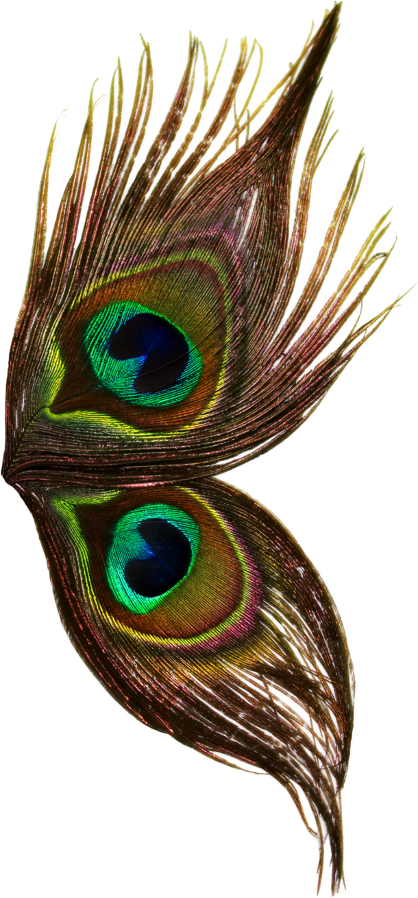 Peacock Wings Dark Png 3130
