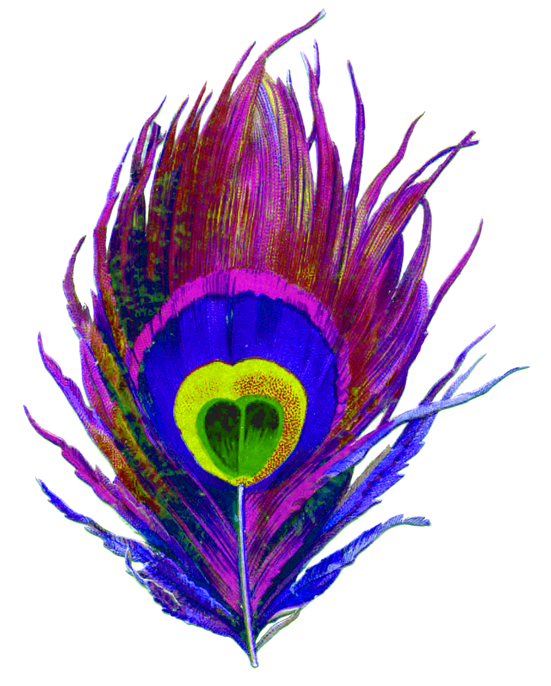Purple, Peacock, Bird, Feather, Colorful, Eye, Designs Png 3128