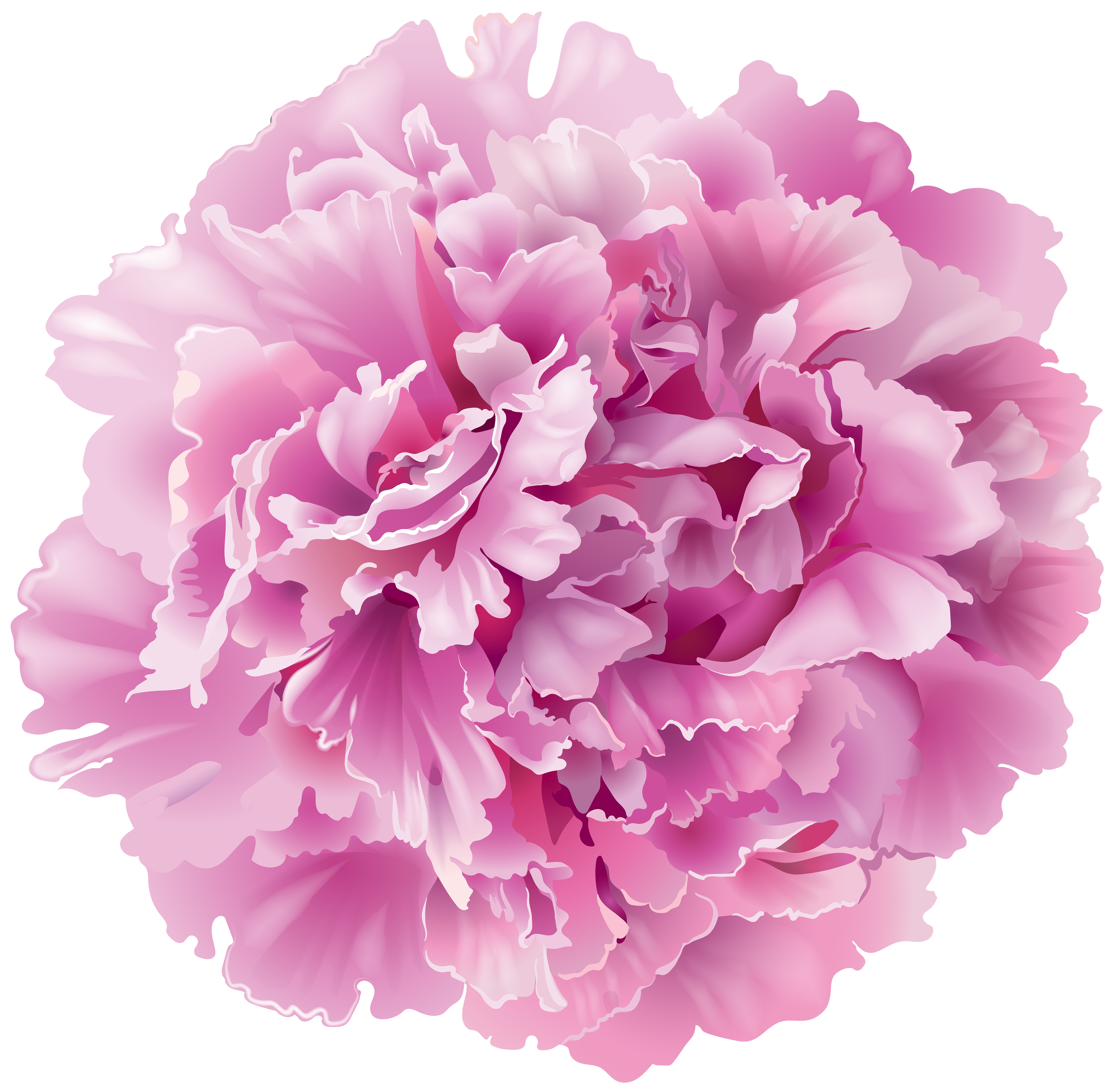 Pink Peony Background PNG Images