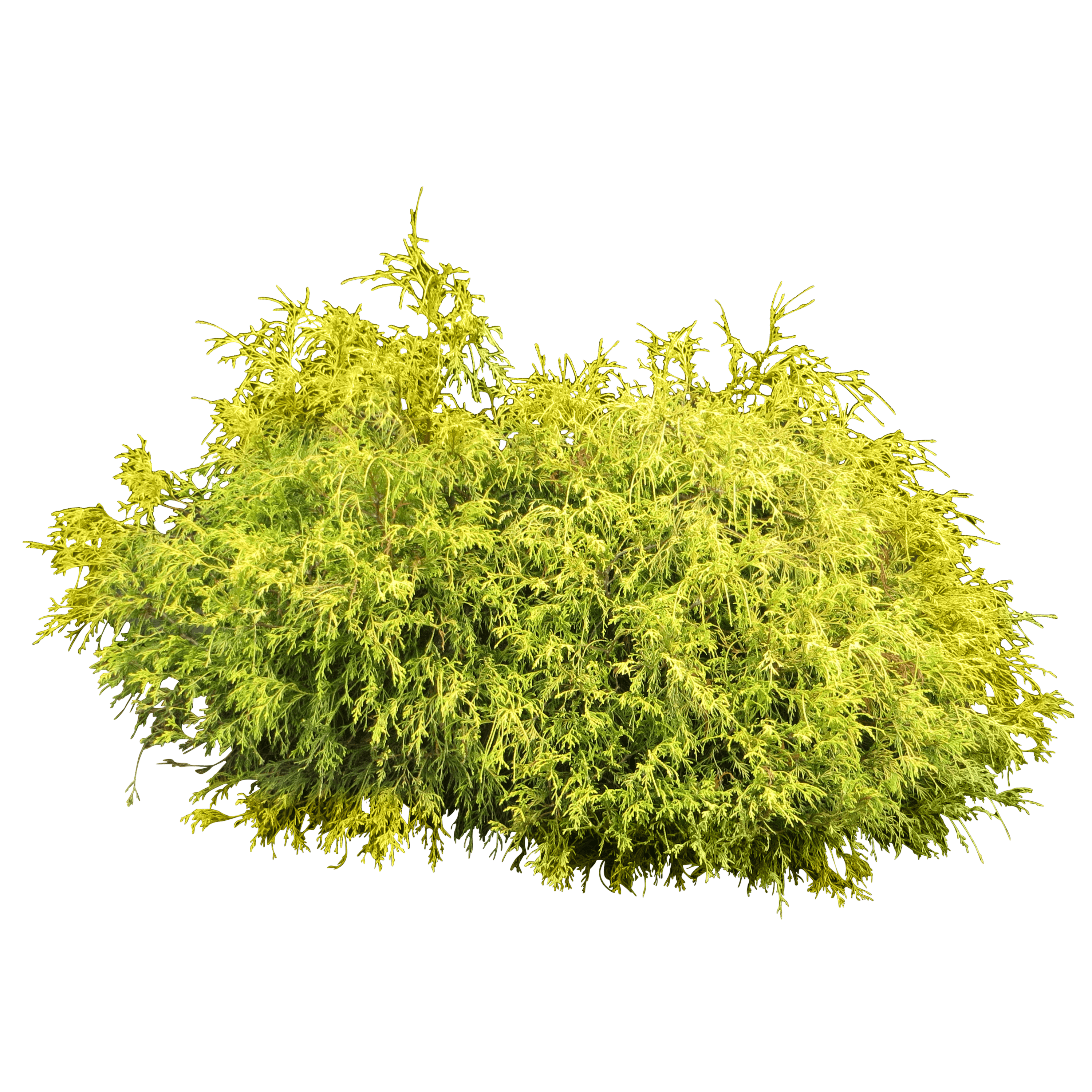 Bush Plant Free Cut Out PNG Images
