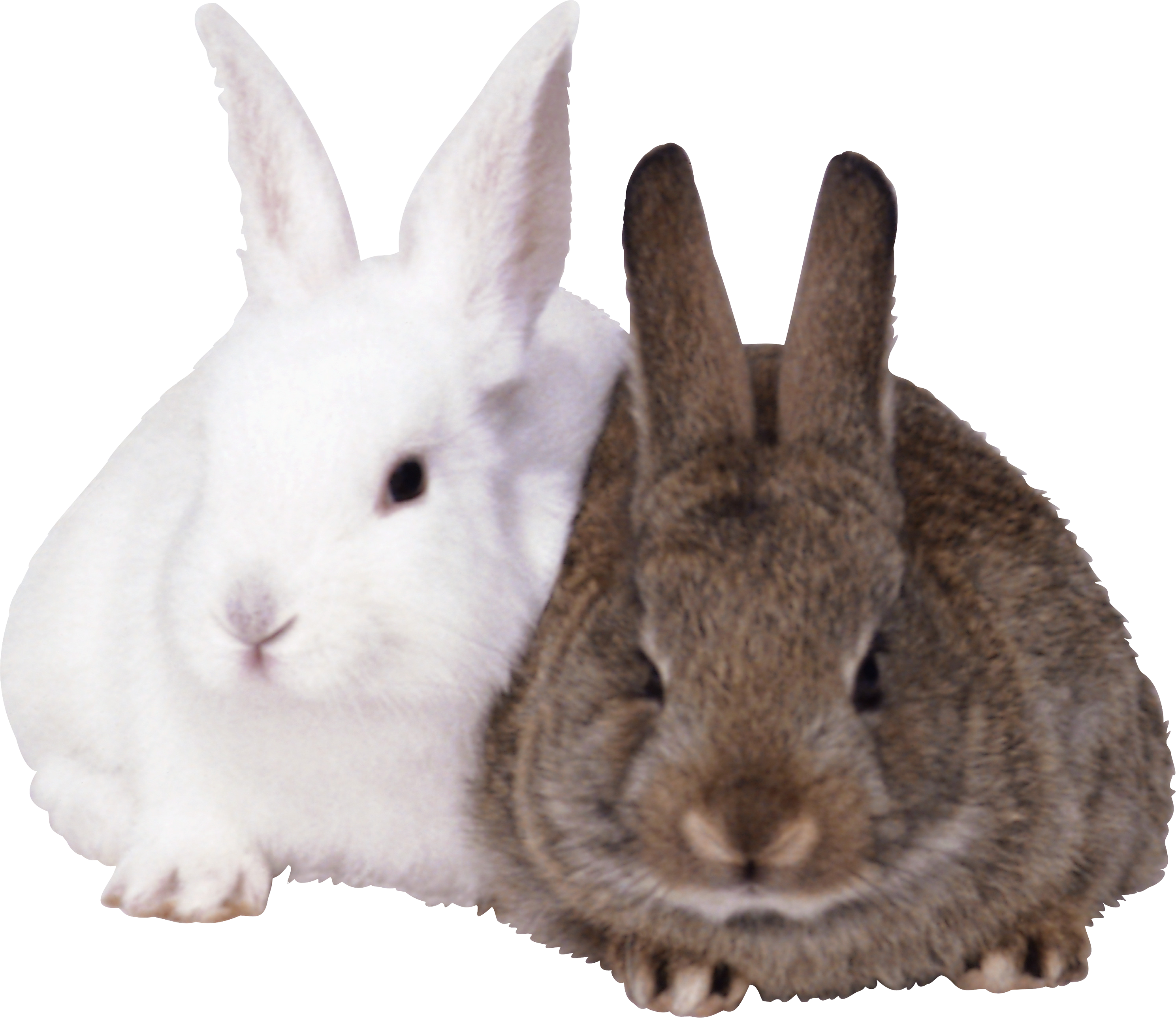 Rabbit Images