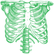 Green Rib Cage Png Transparent Images  3438
