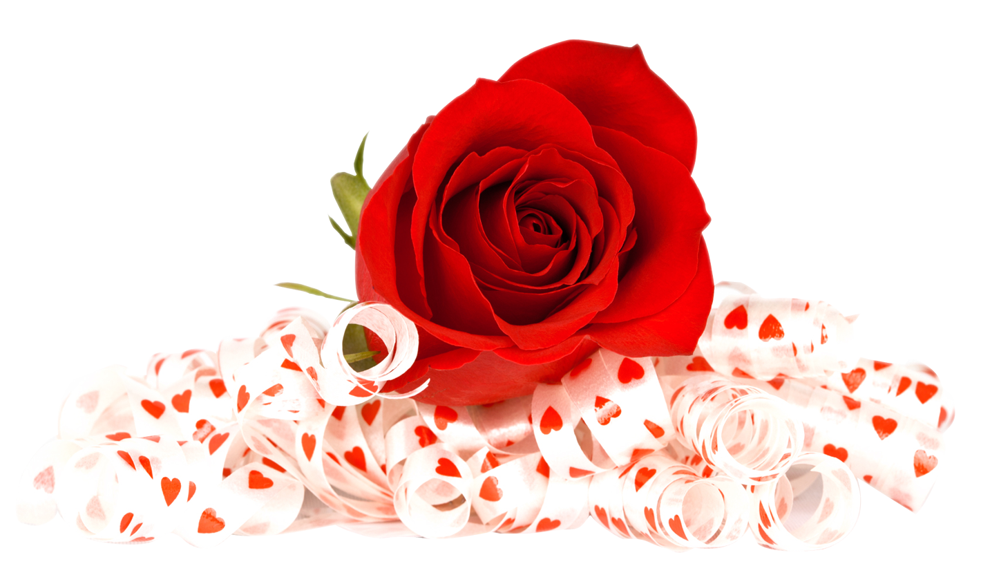 Rose Flowers Cut Out Background 16251