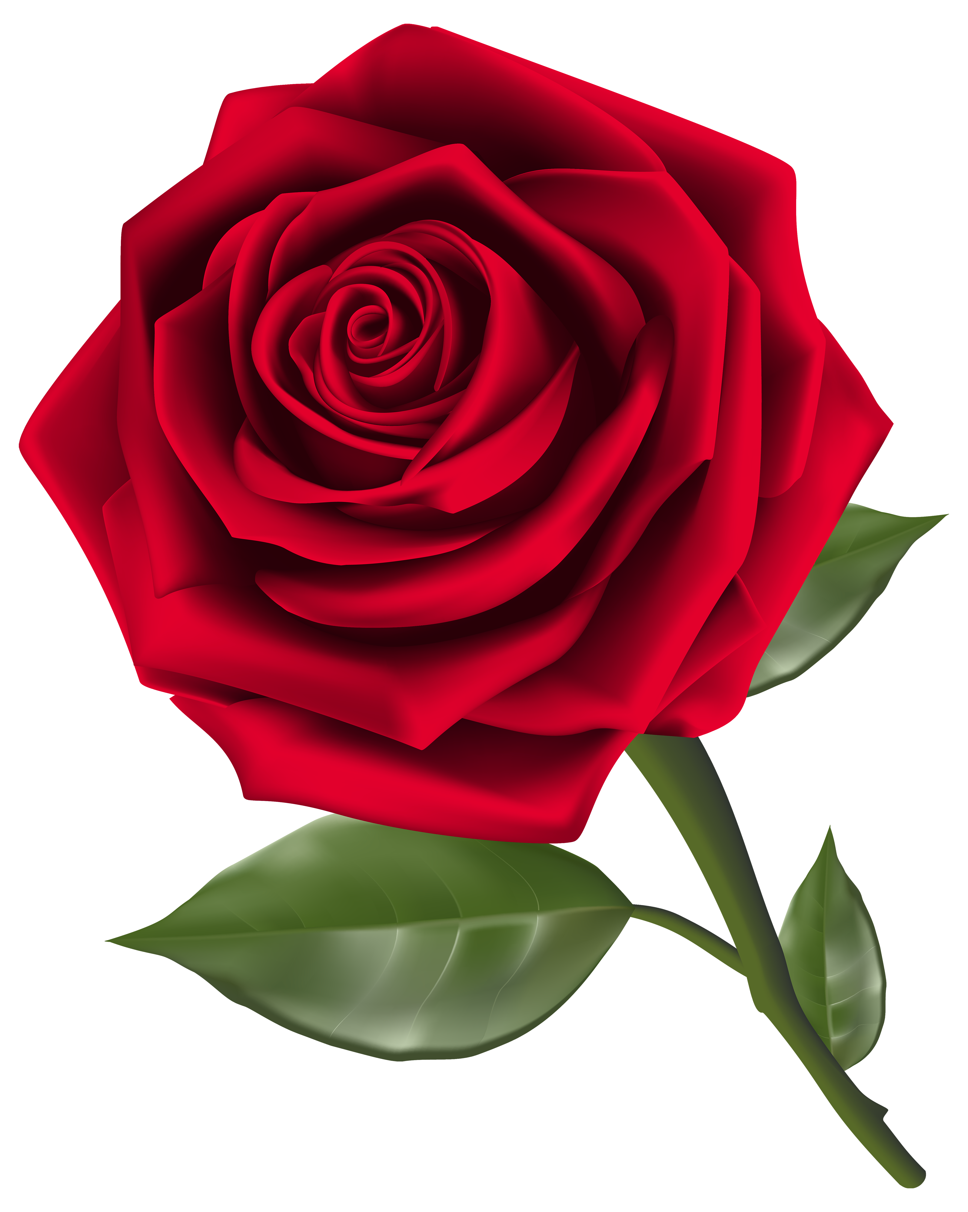 Rose Clipart Flowers Photo